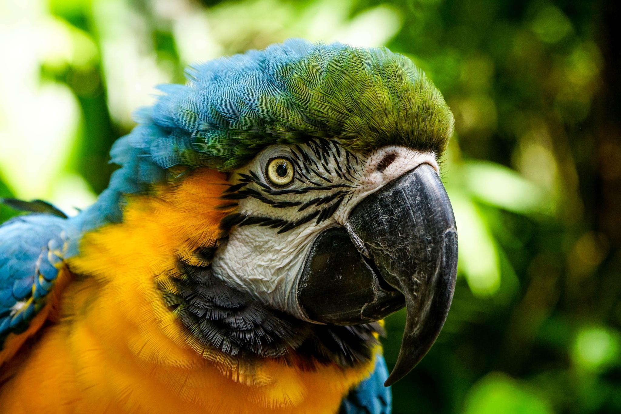 Macaw Parrot by Andrew Oostenbroek