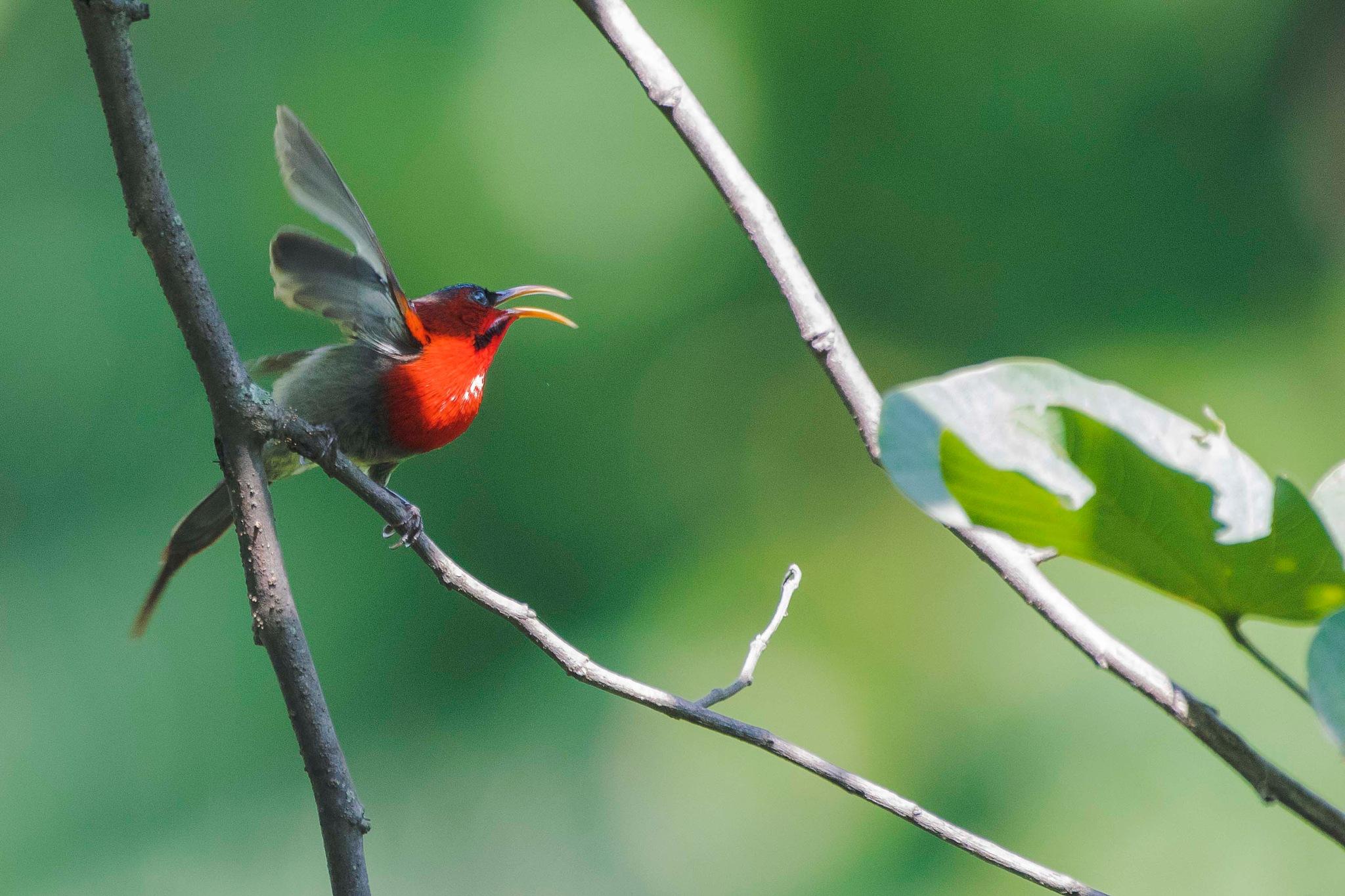 Chirping Beauty  by VIKAS SHARMA