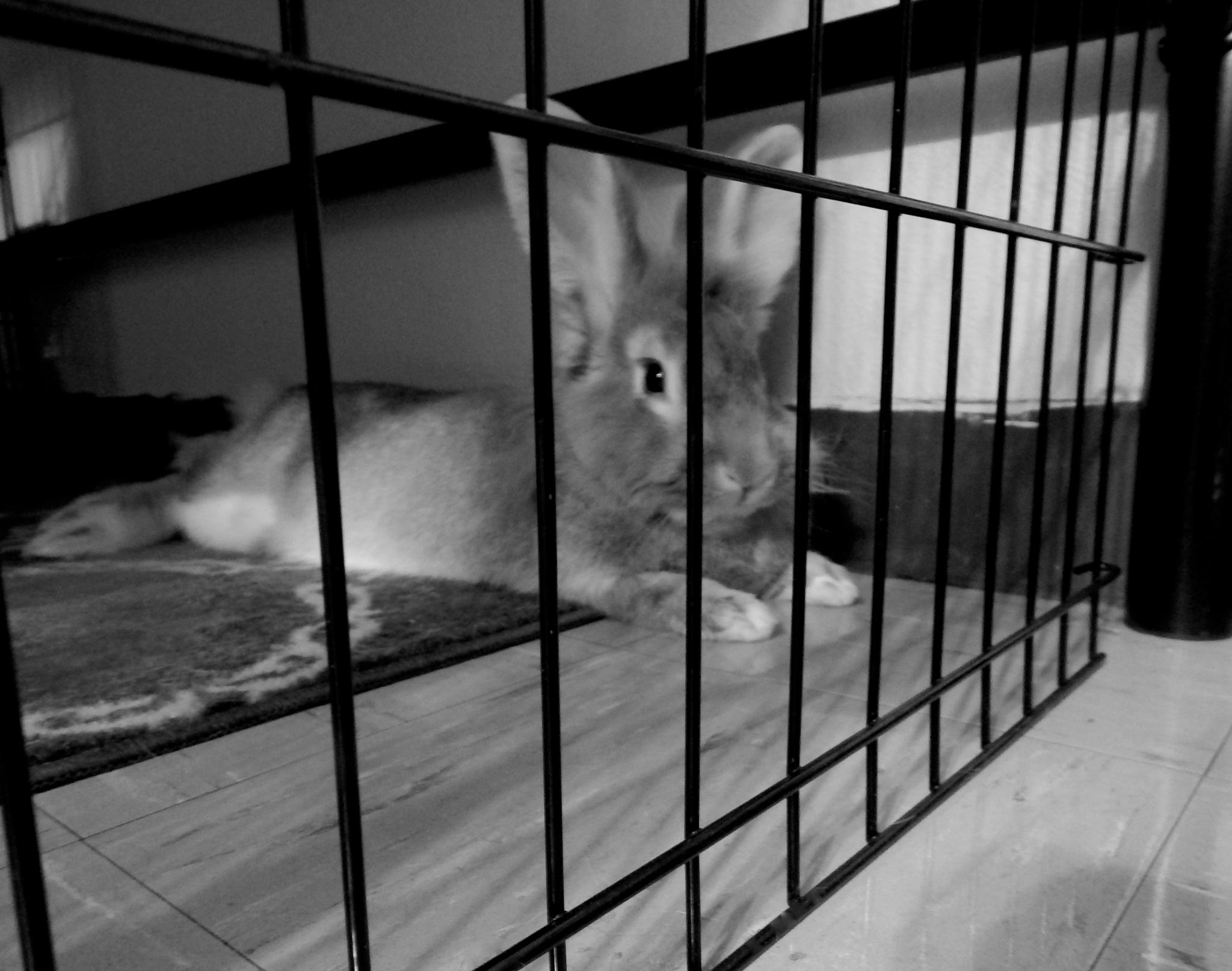 They Put Him Behind Bars by Whitney Thursday