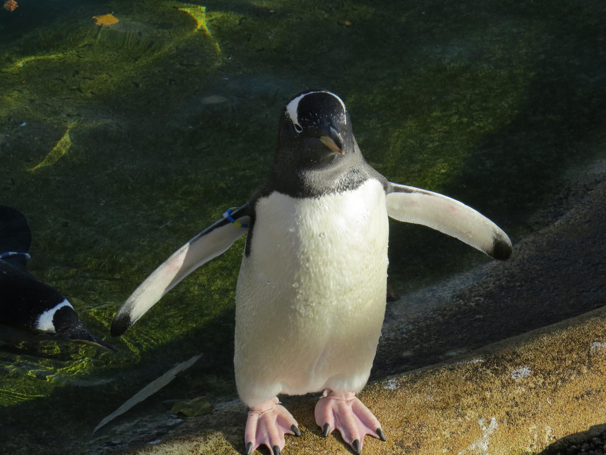 Penguine by Harika Kummara
