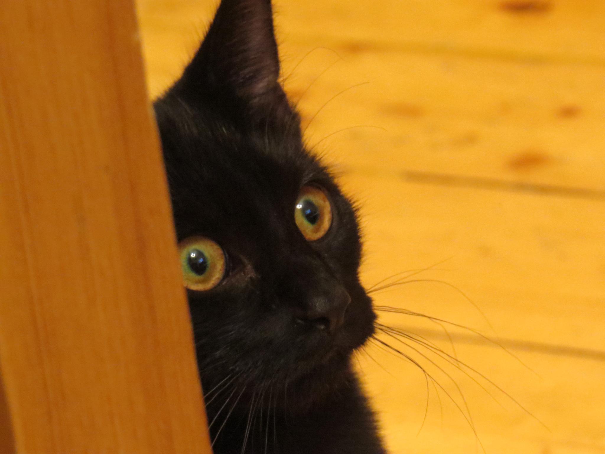Photo in Animal #cat #pet #animal