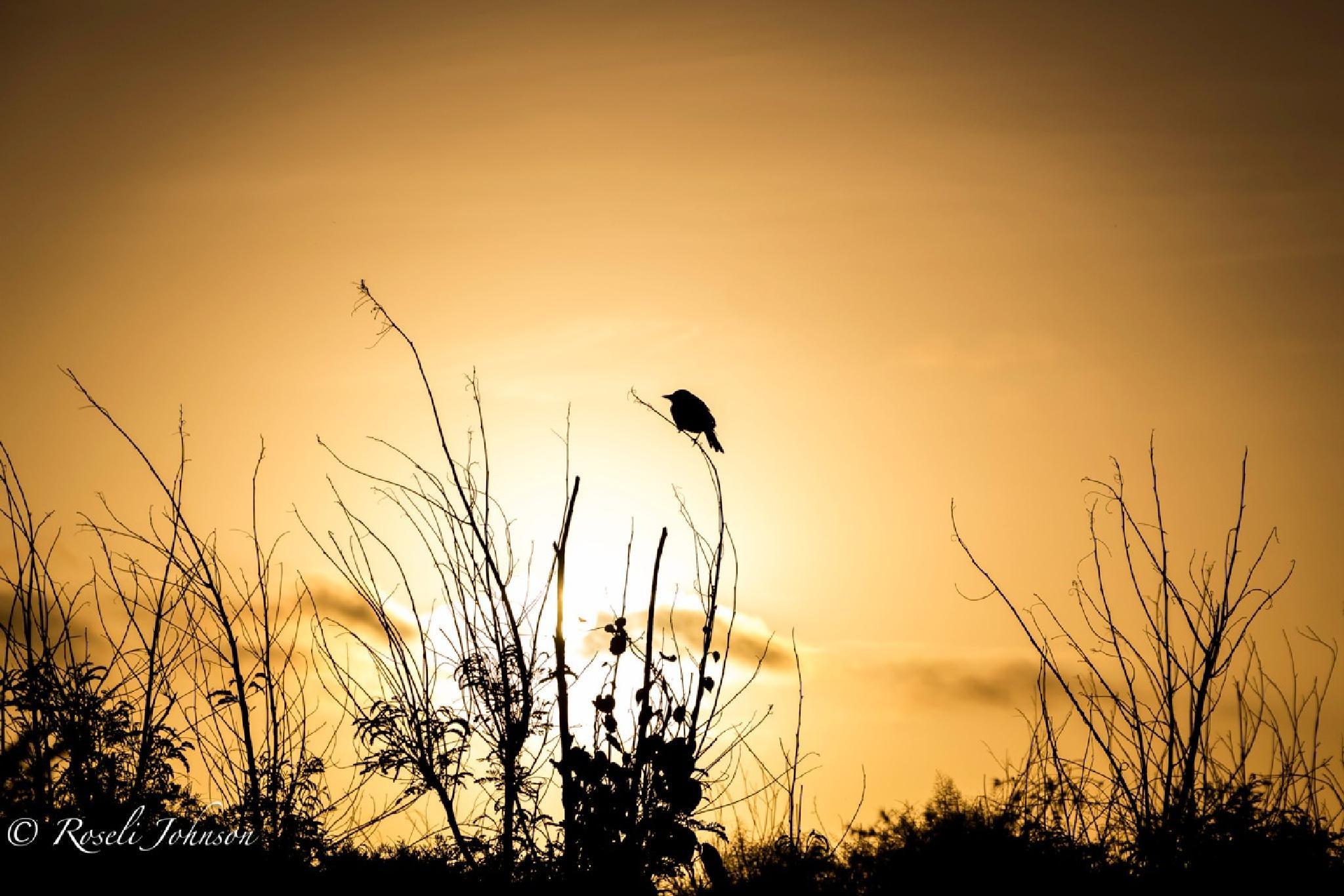 Sunset walks by roselij1