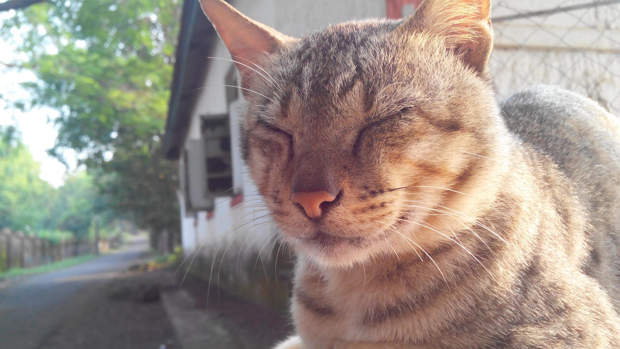 CAT by sumit jaiswar