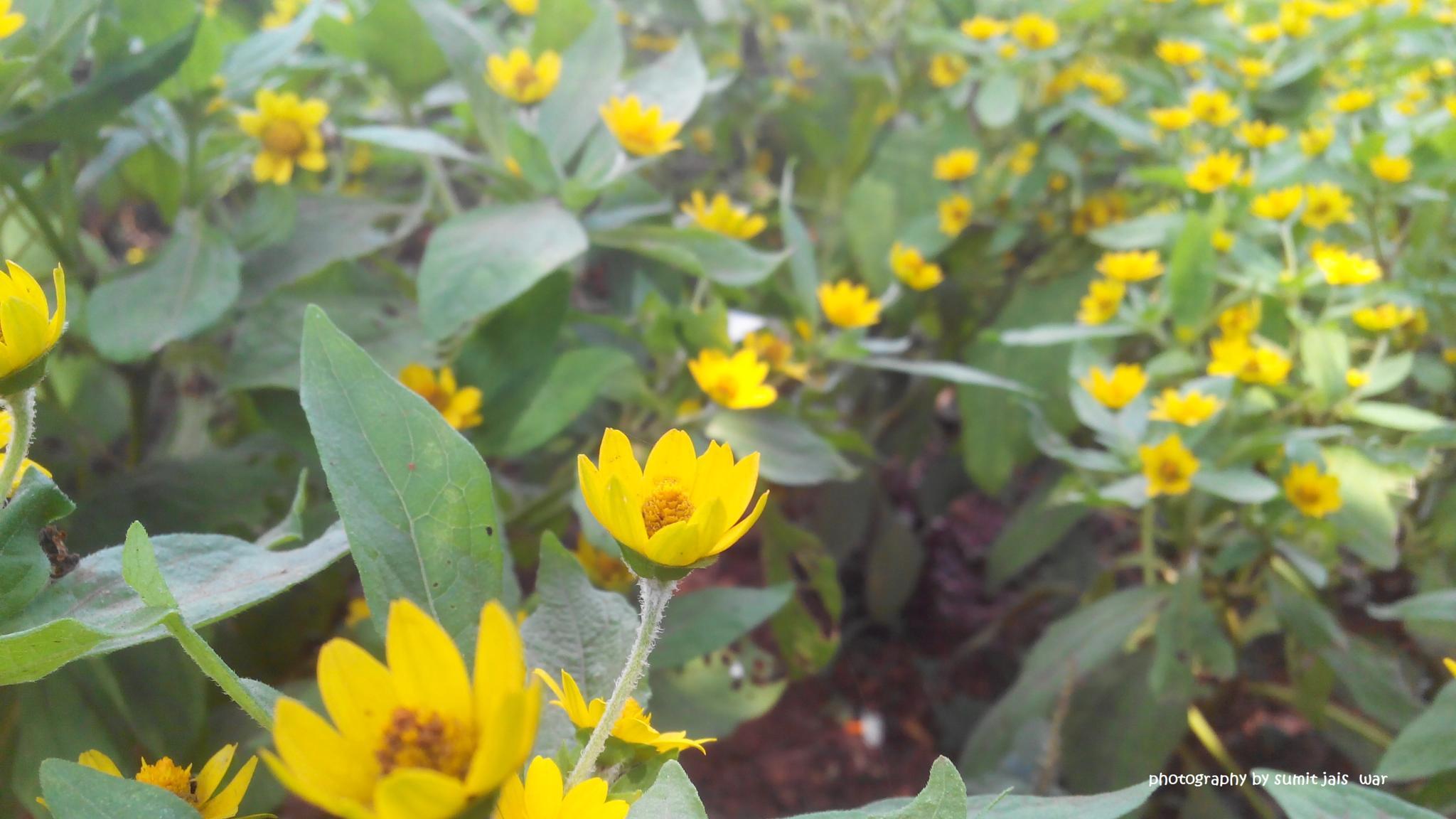 flower by sumit jaiswar