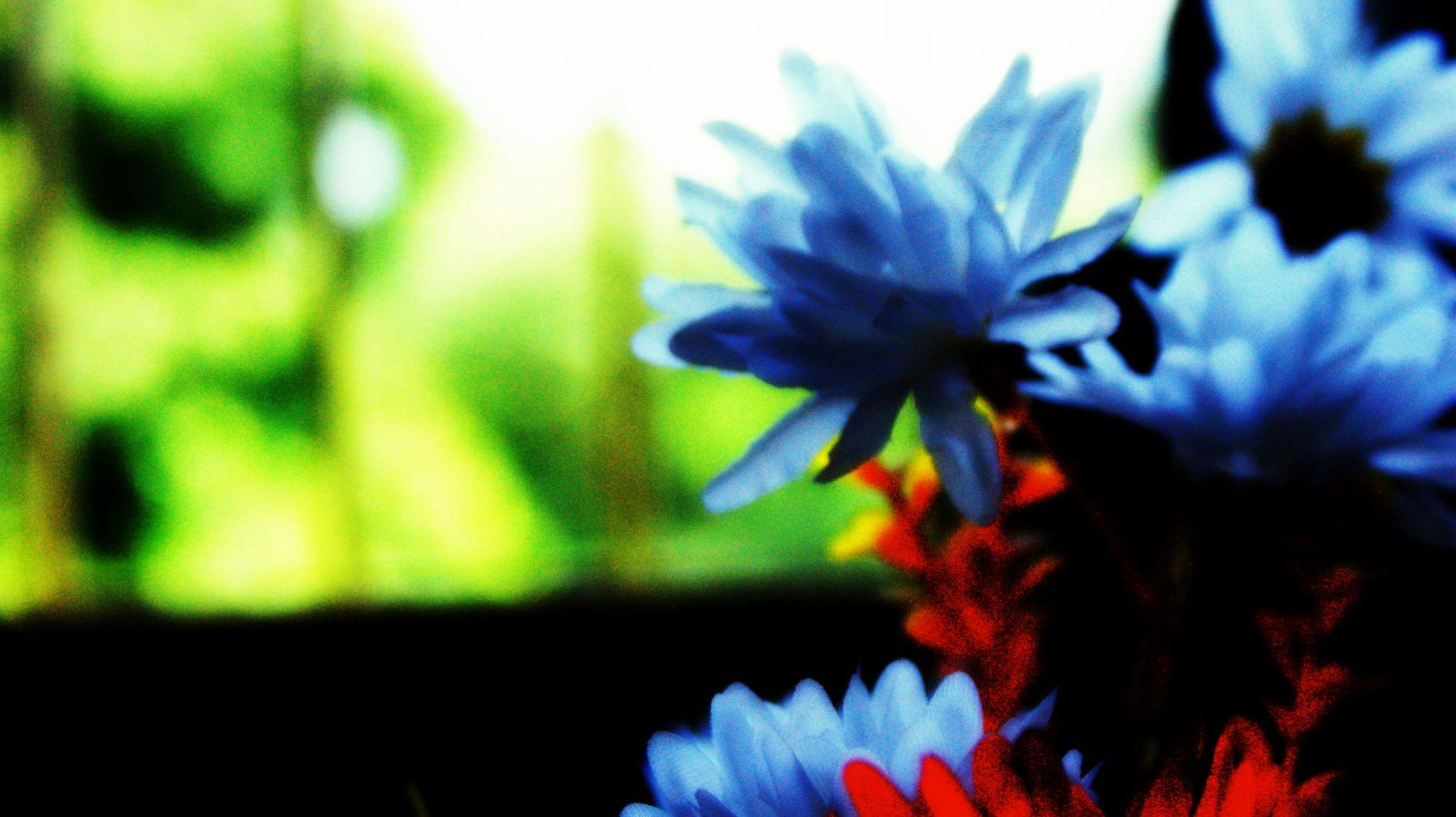 Bloom by pavan.prnc