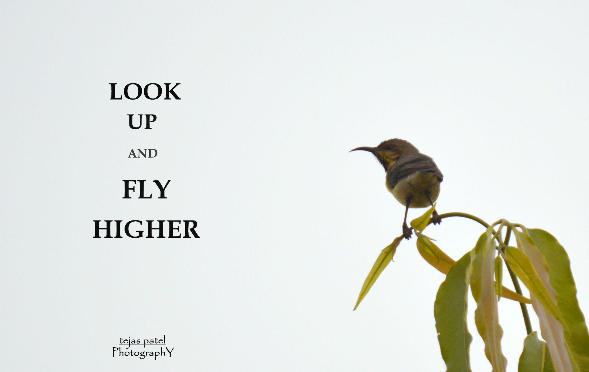 Tailor Bird by tejas.patel.9235199
