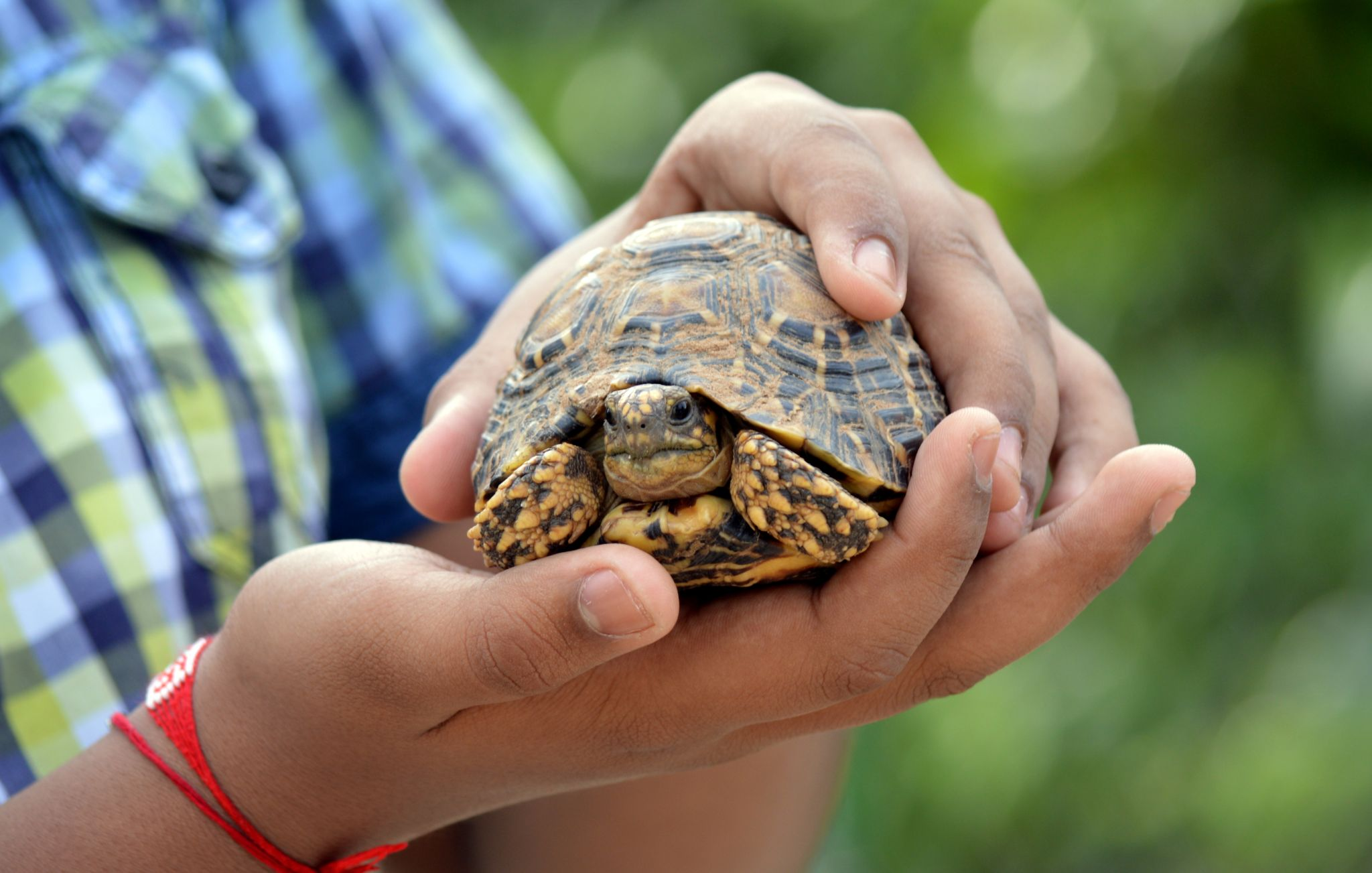 Safe in Hands - Star Tortoise by tejas.patel.9235199