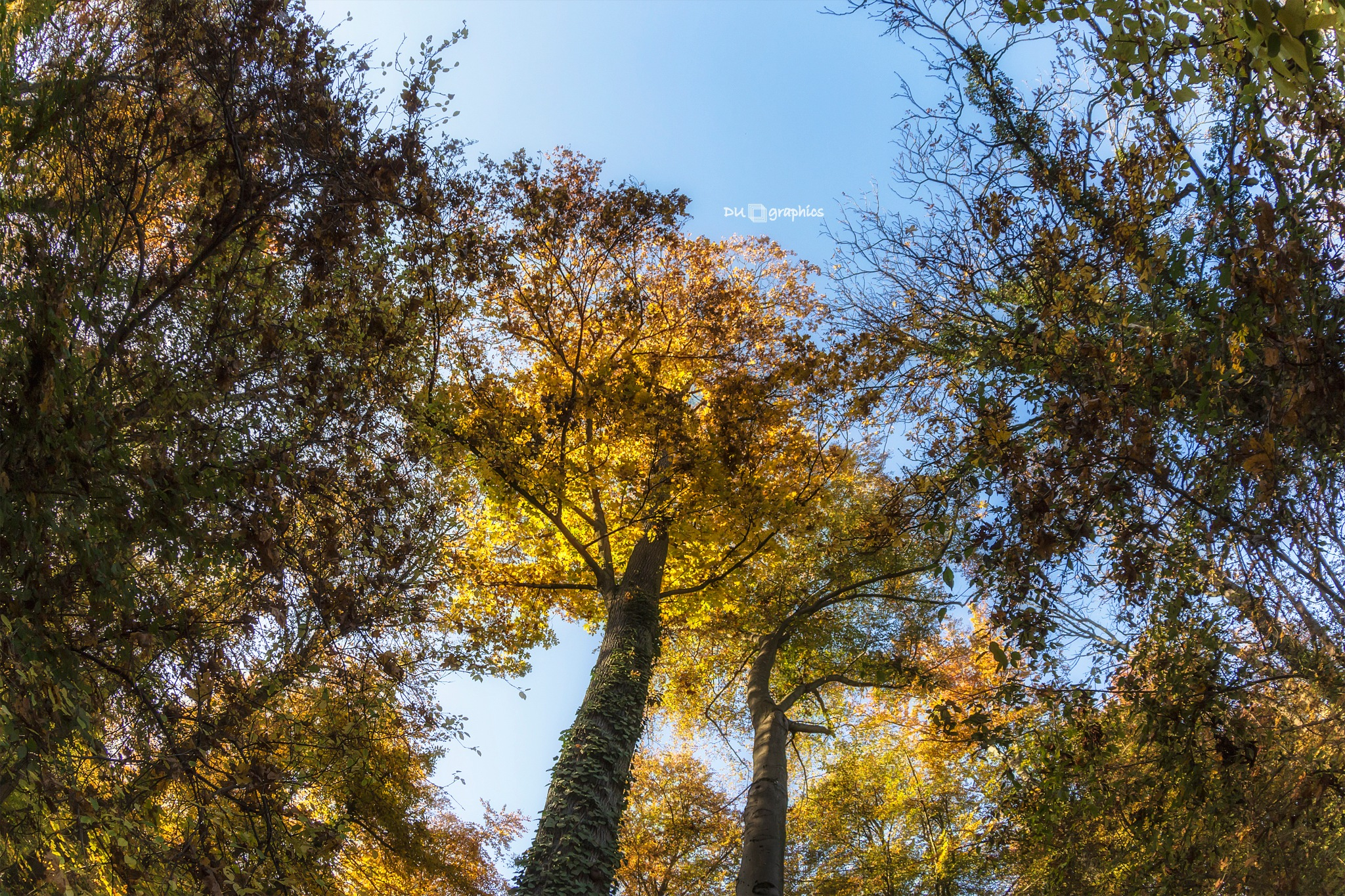 the colors of autumn by daniel u.