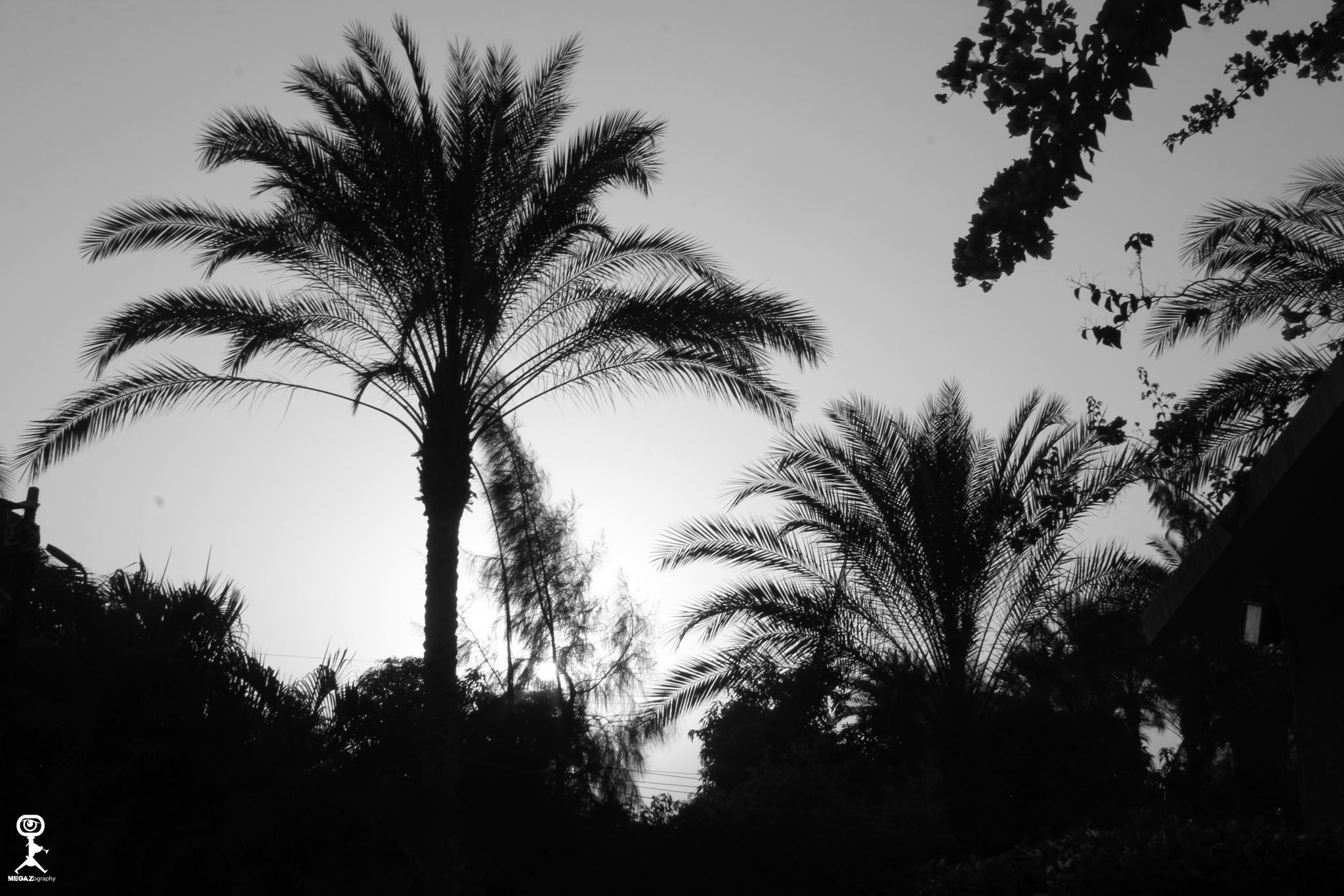 Photo in Rural #rural #nature #green #monochrome #black & white #b&w #megazography