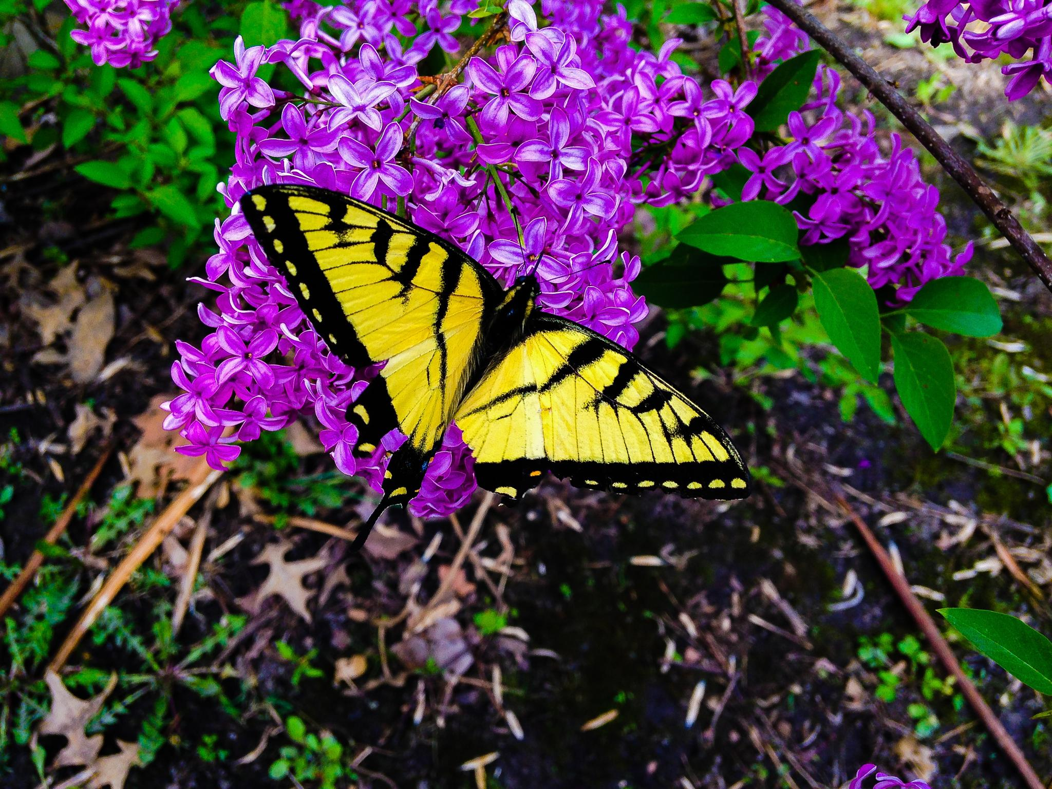 Photo in Animal #butterfly #flower #insects #spring