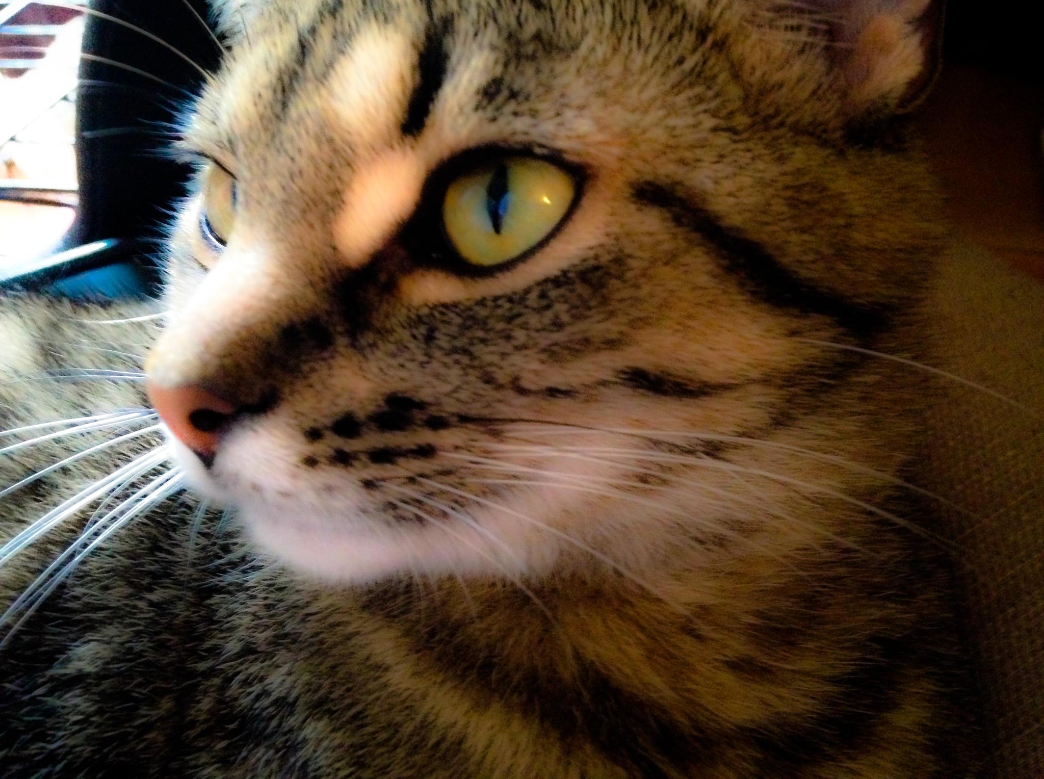 Photo in Animal #cat #kitten #pet #animal