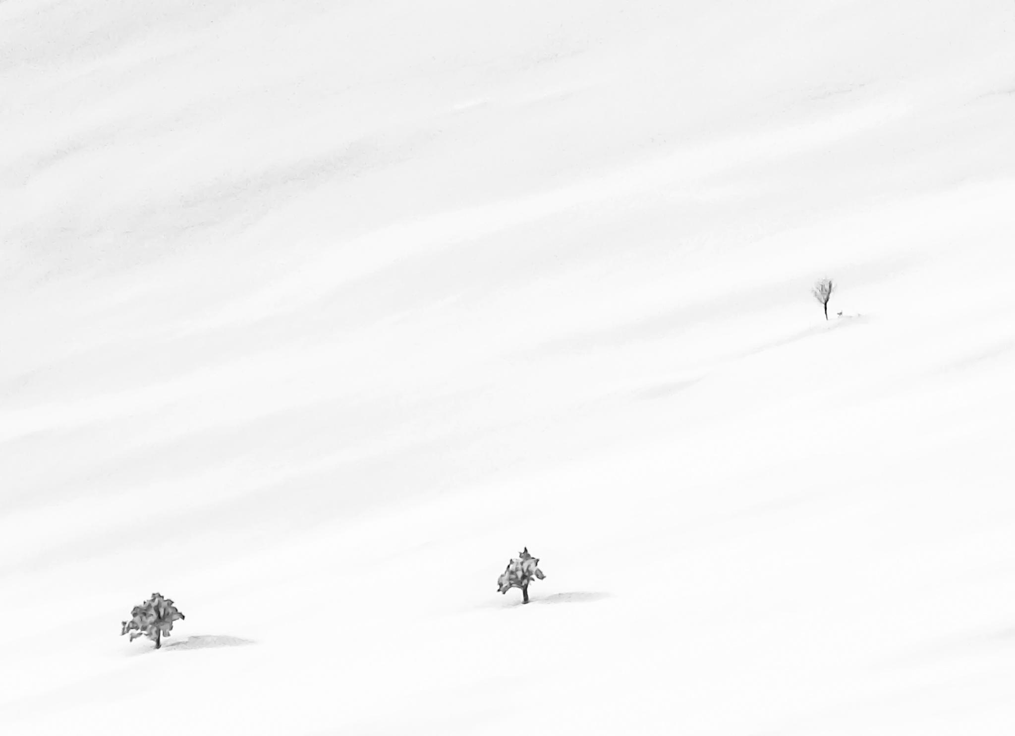 Winter by Elisabeth Tennøy