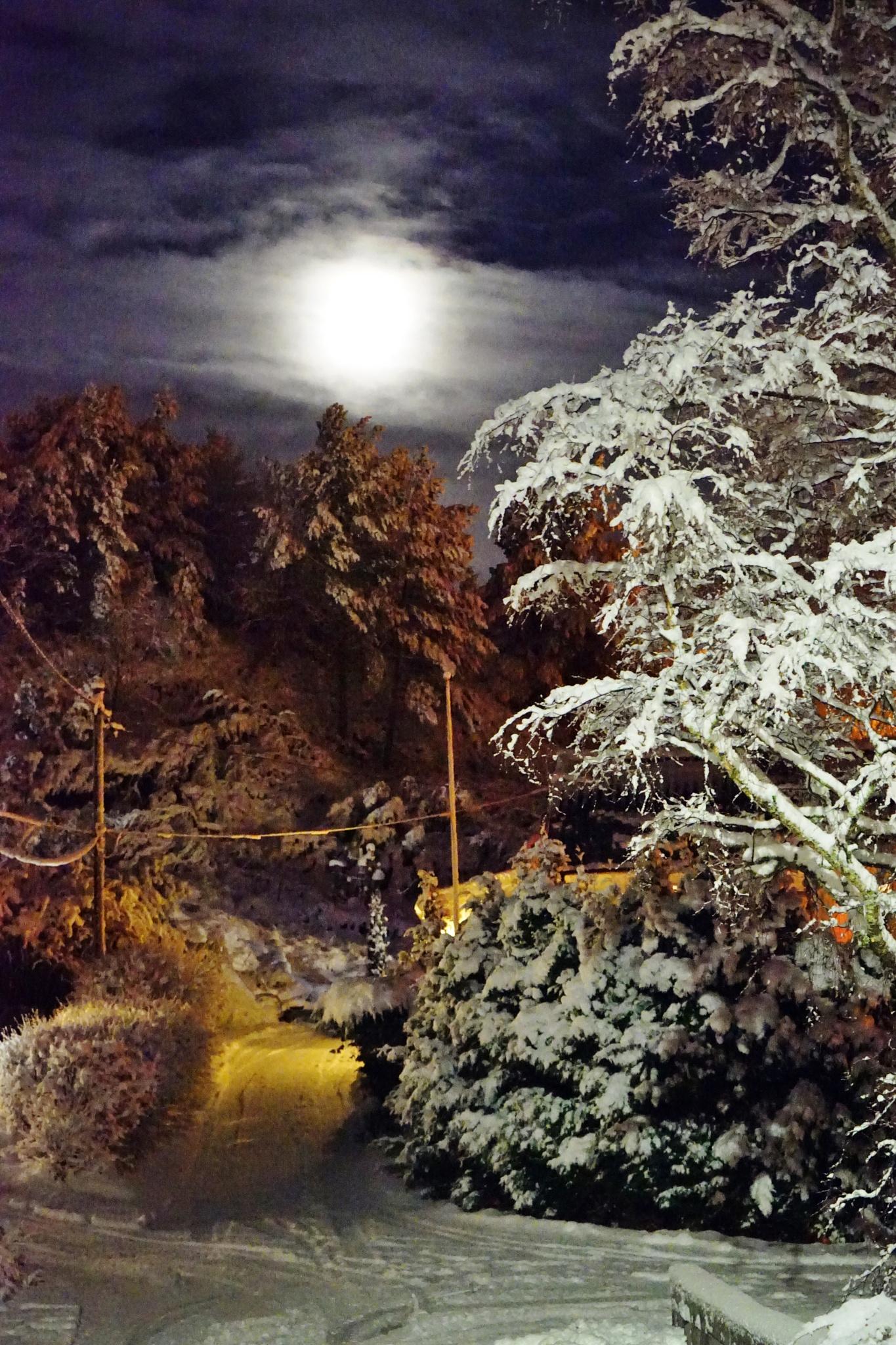 Winternight by Elisabeth Tennøy