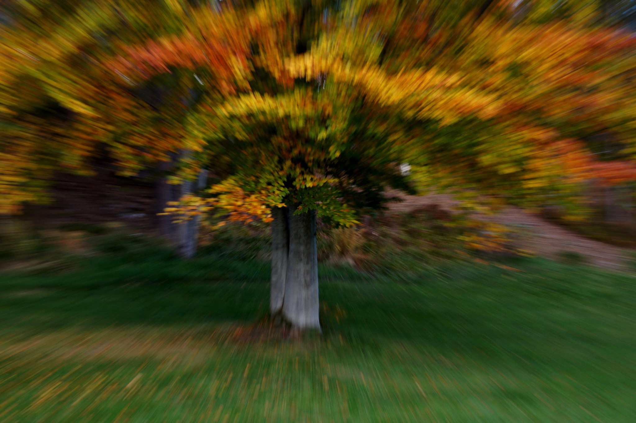 Autumn tree by Elisabeth Tennøy