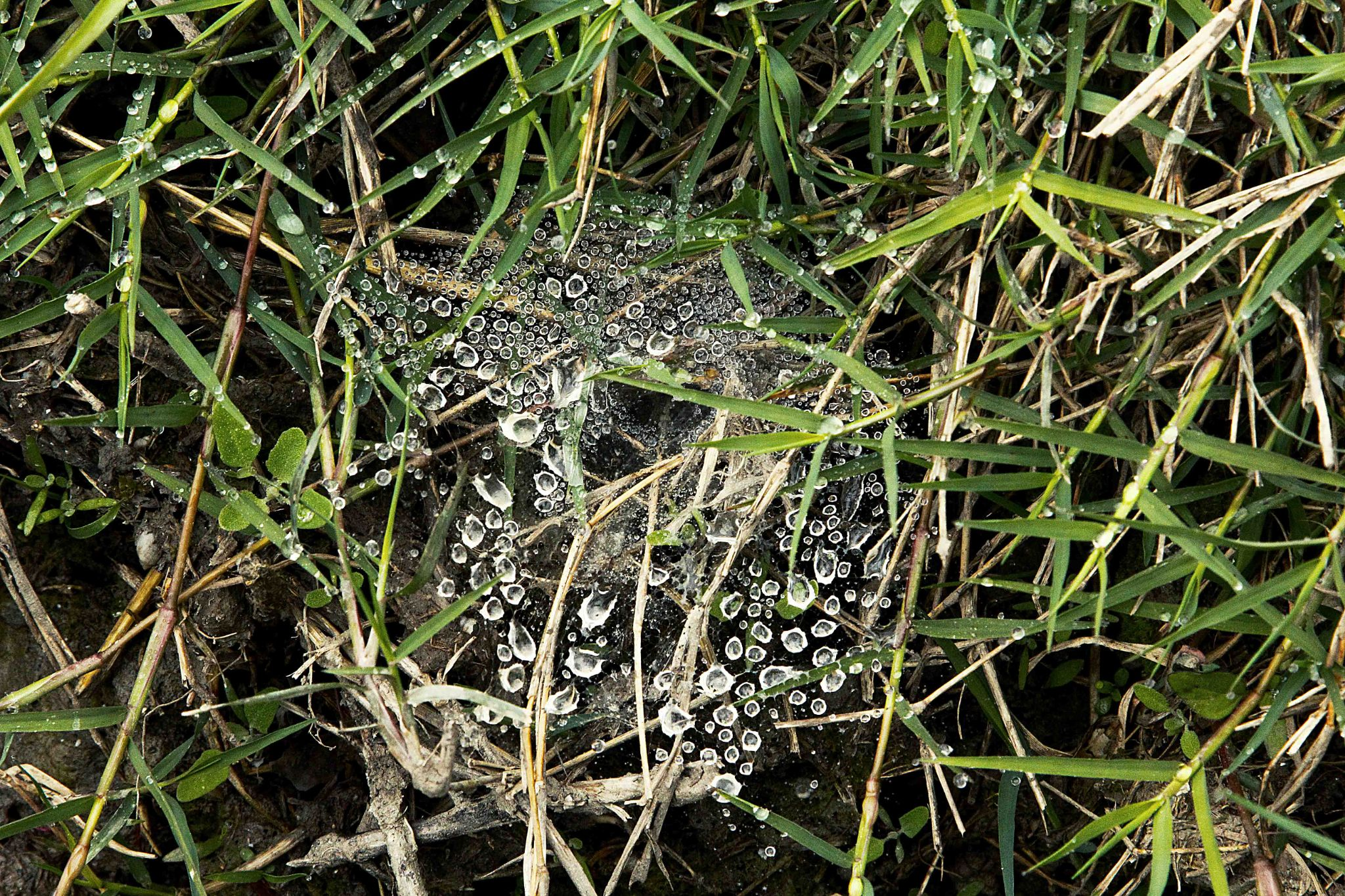 Cobweb with drops by mohammad mardan