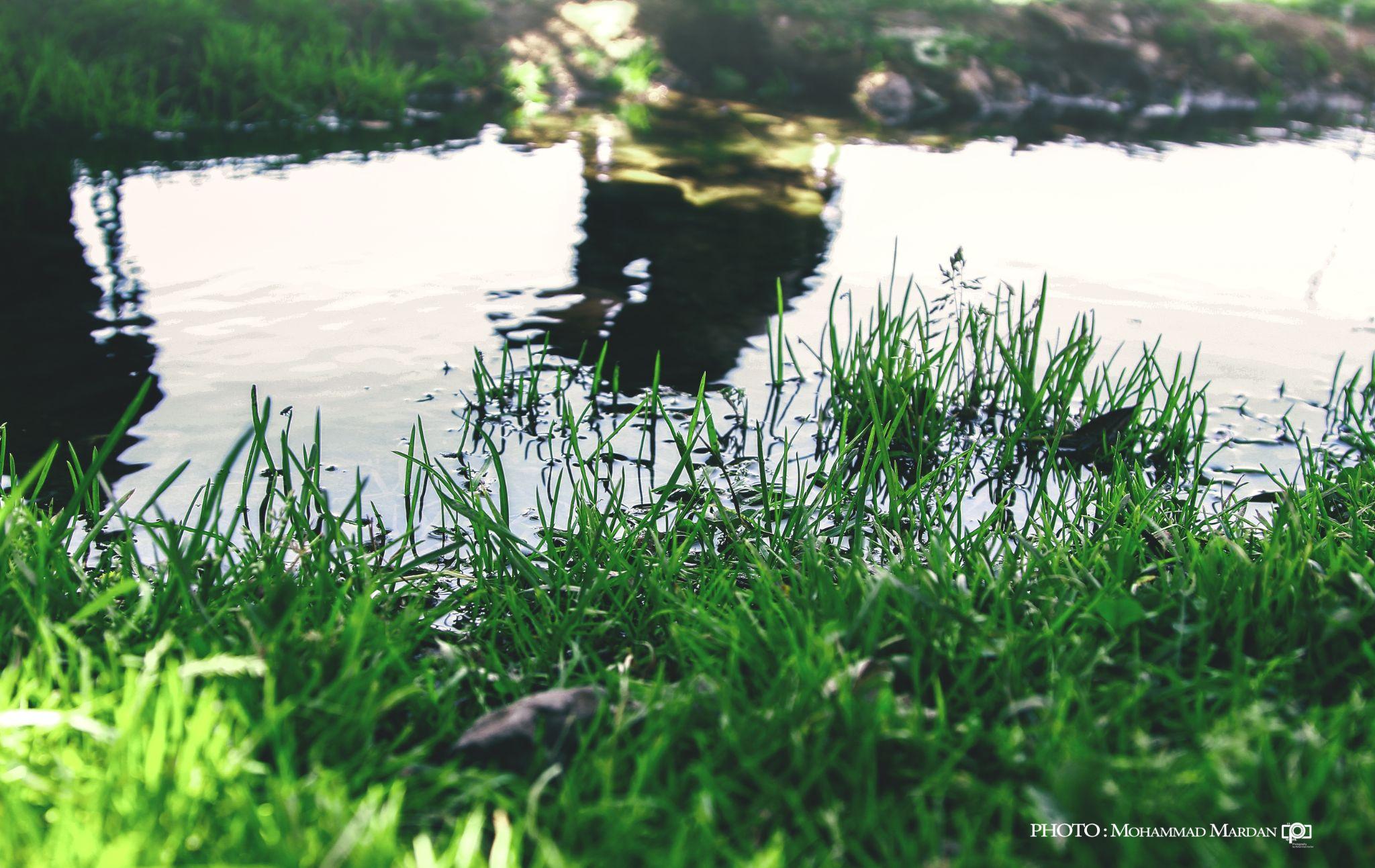 Reflection by mohammad mardan