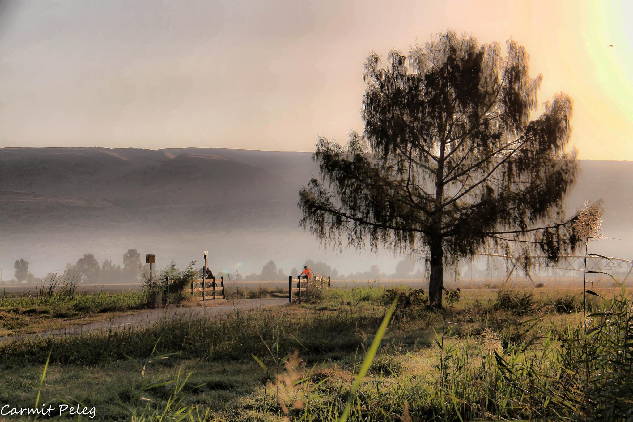 Misty Morning by Carmit Peleg