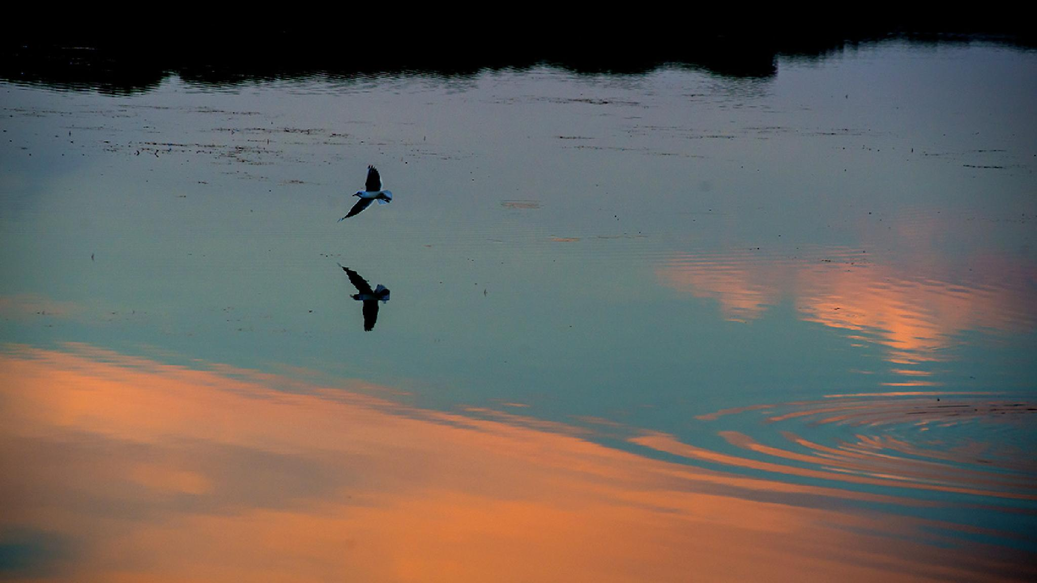 Flight by Lorenzo Bruno