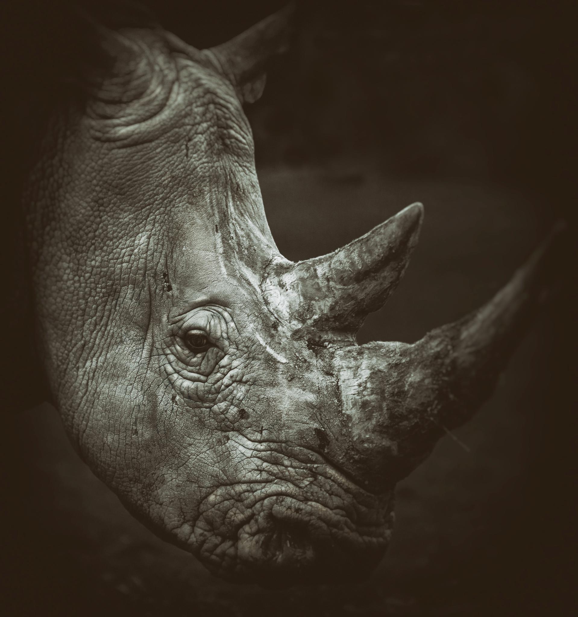 Photo in Black and White #rhino #africa #wild