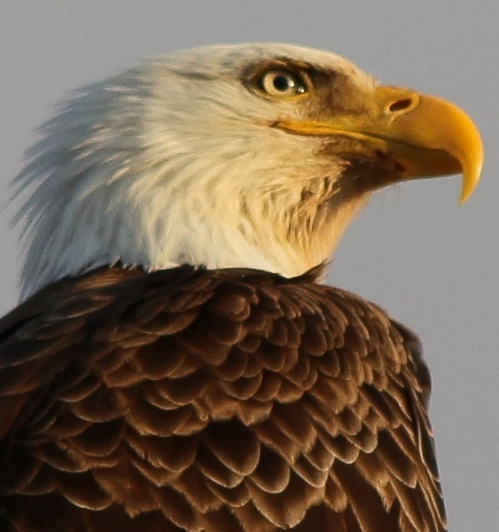 Eagle by Annette McCann