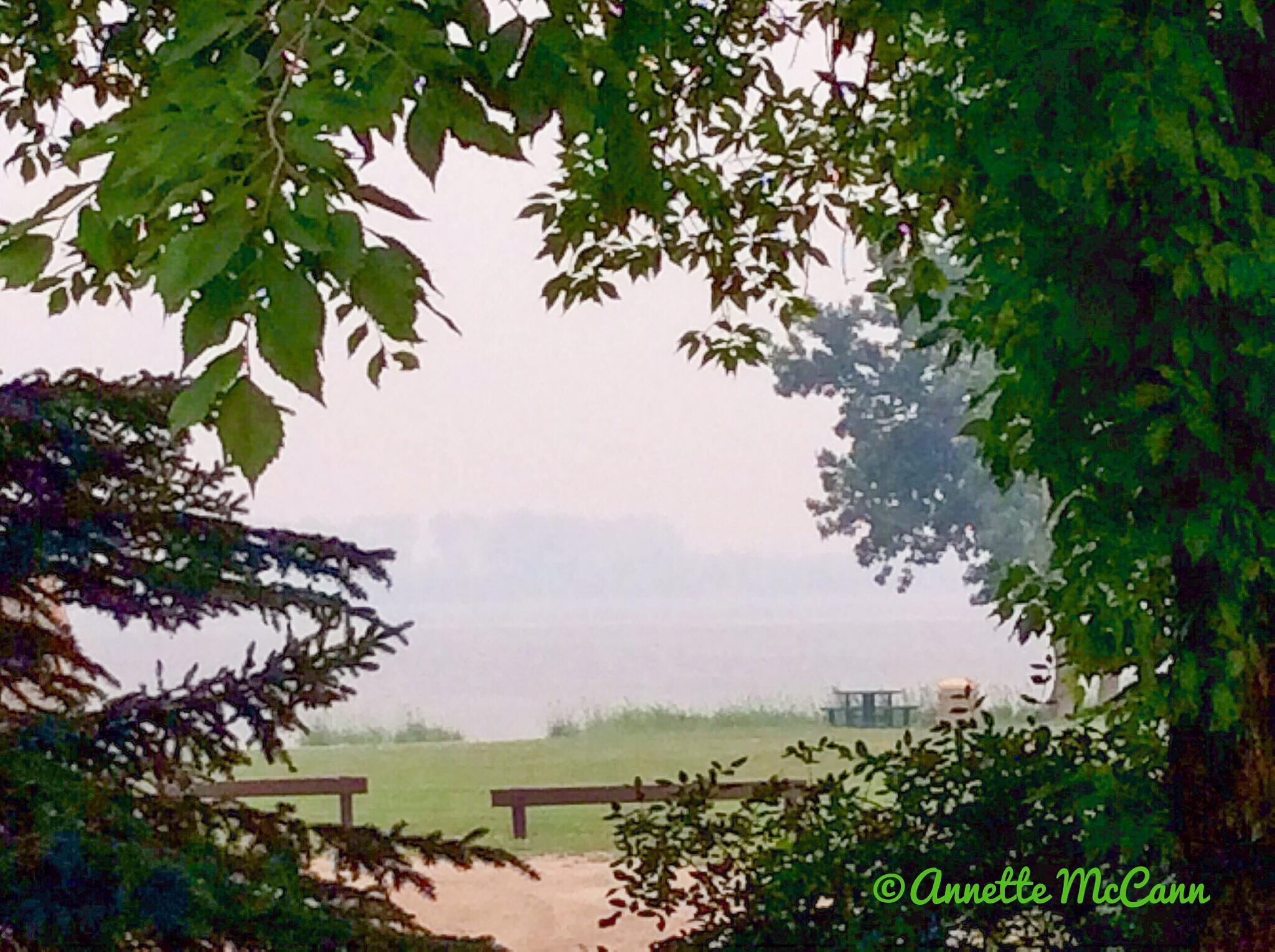 Smoke through the trees by Annette McCann