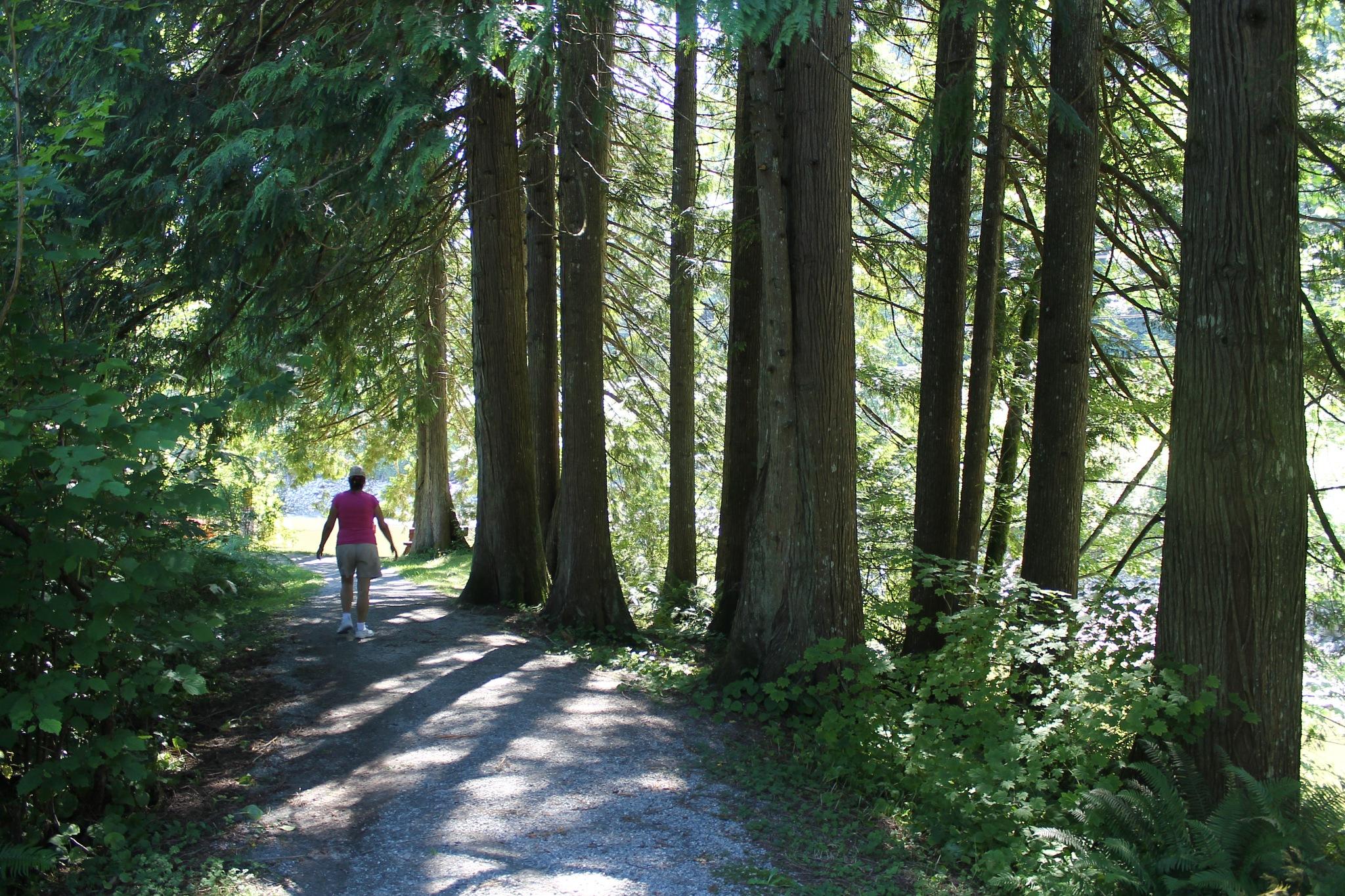 In the woods by Metro Van Primus