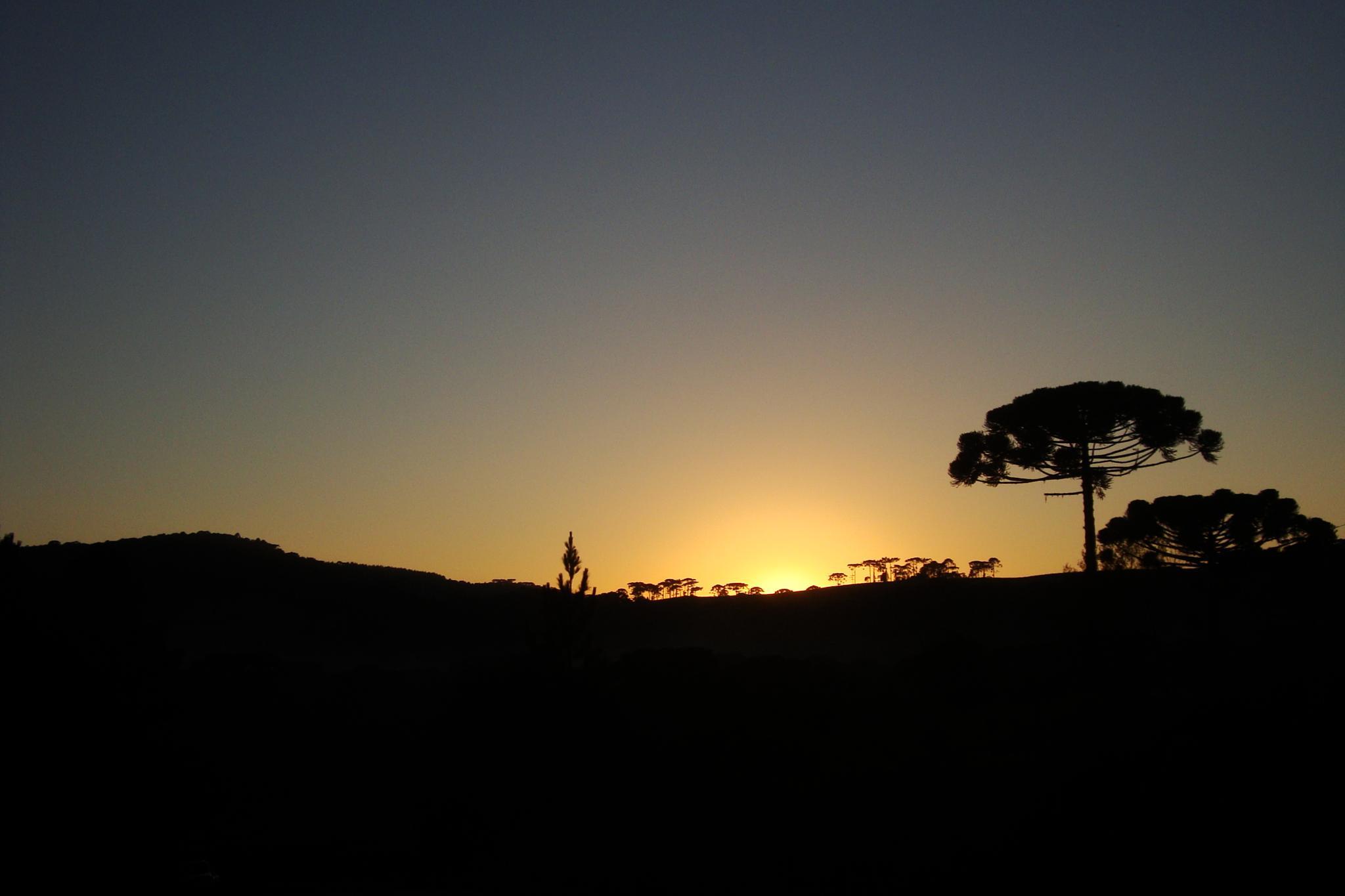 nascer do sol no campo by Maciel Panisson
