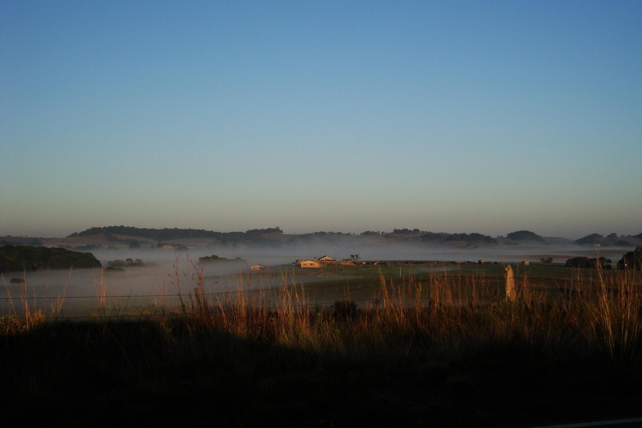 neblina no campo by Maciel Panisson