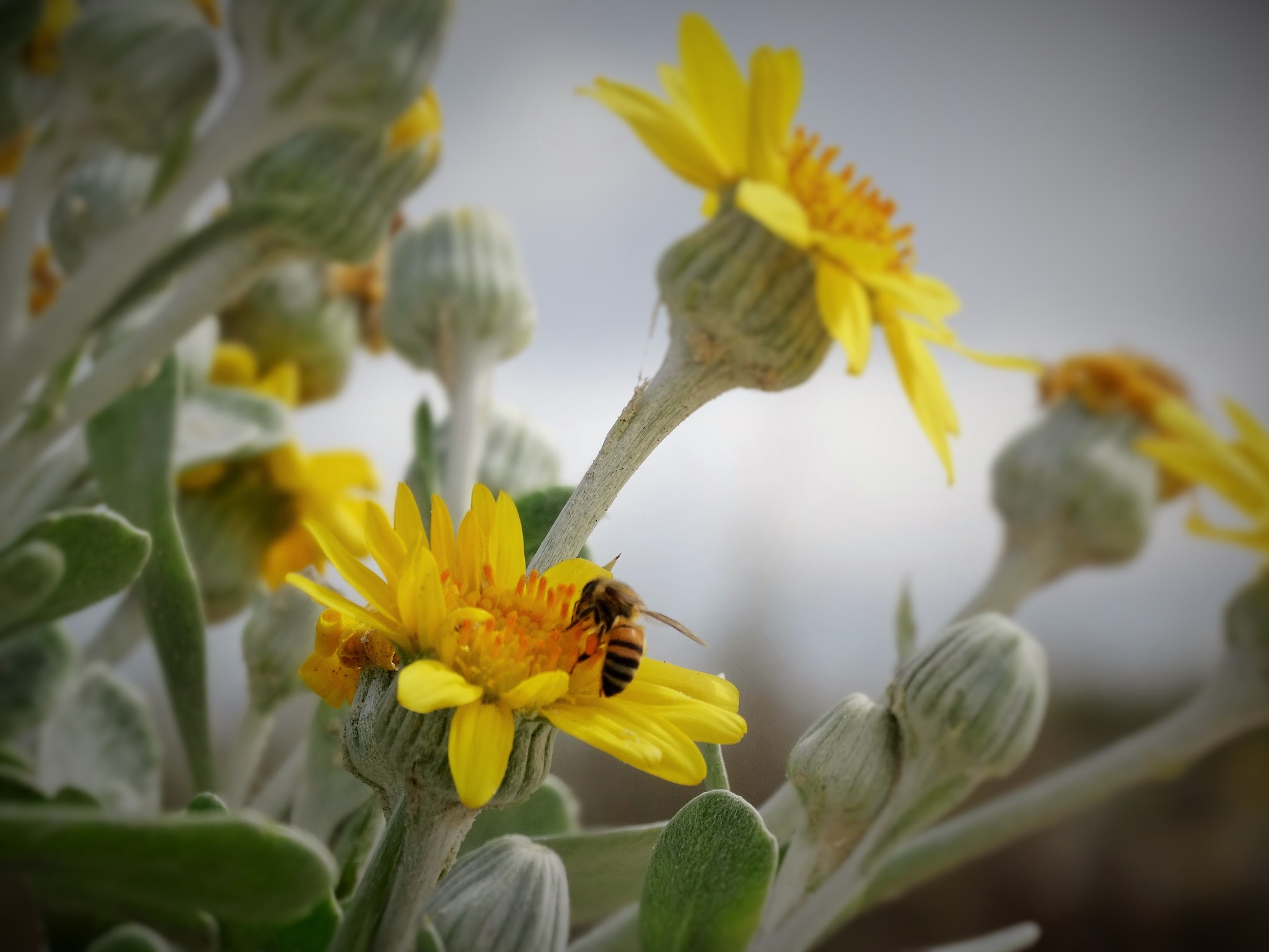 na busca do doce da flor by Maciel Panisson