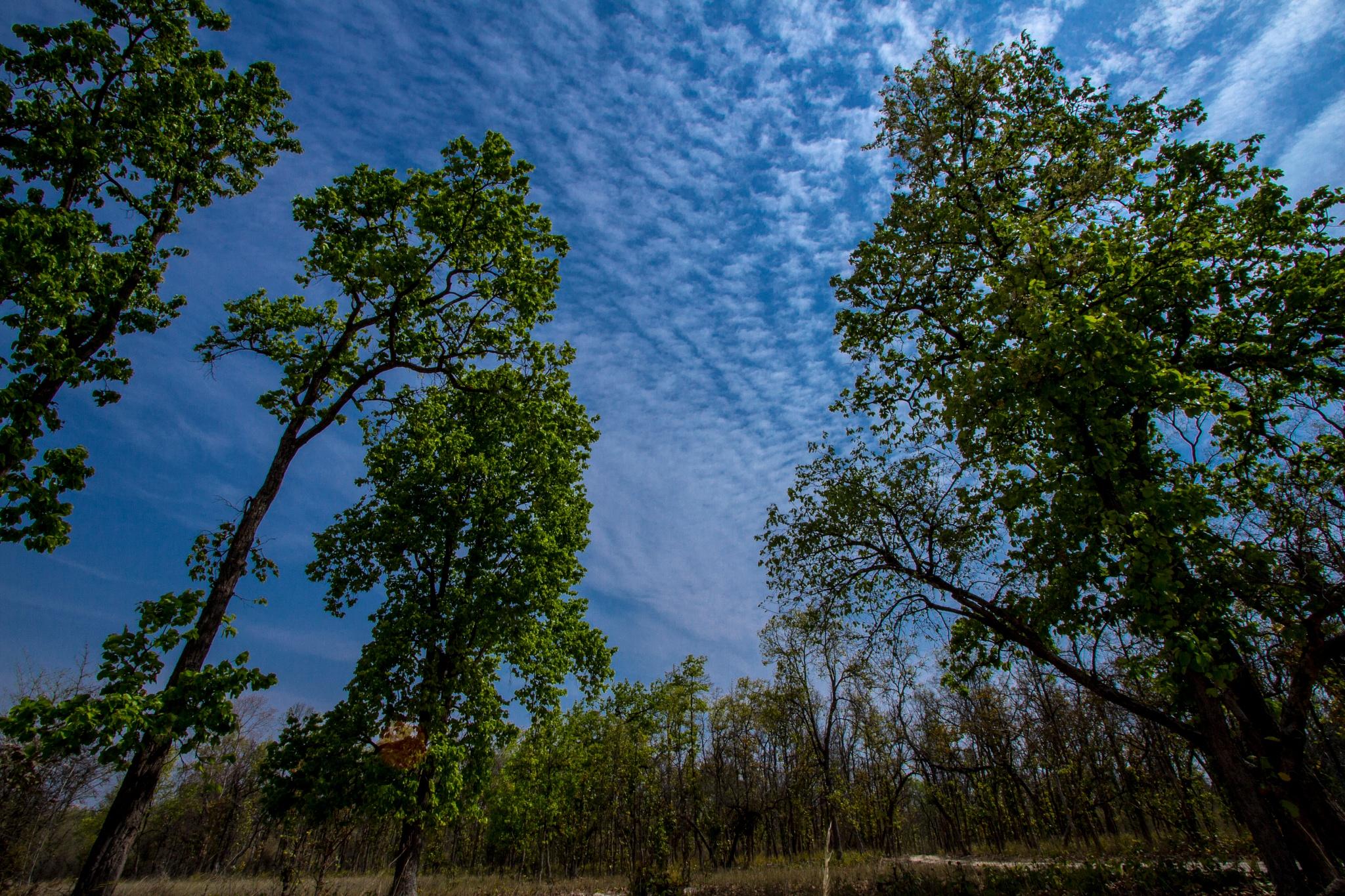 Reach the skies by Monish kumar