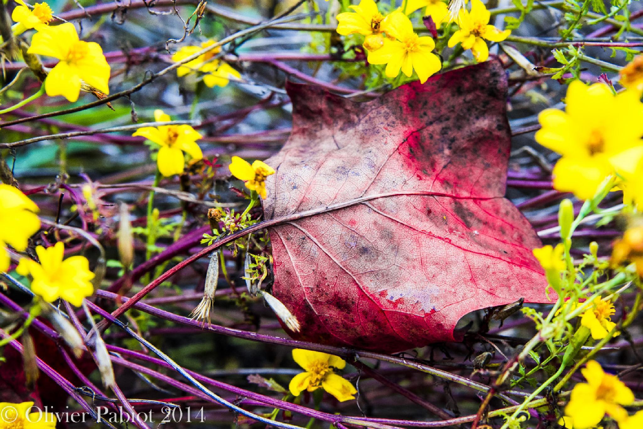 Untitled by Photoroch