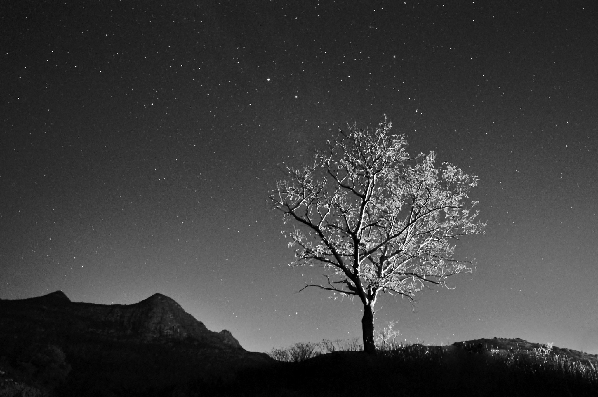 Dreaming Tree by Nakedmind