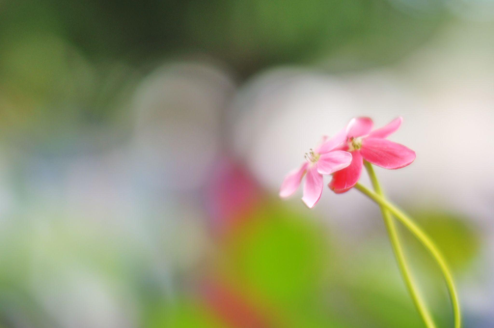 Floral Hug by Nakedmind