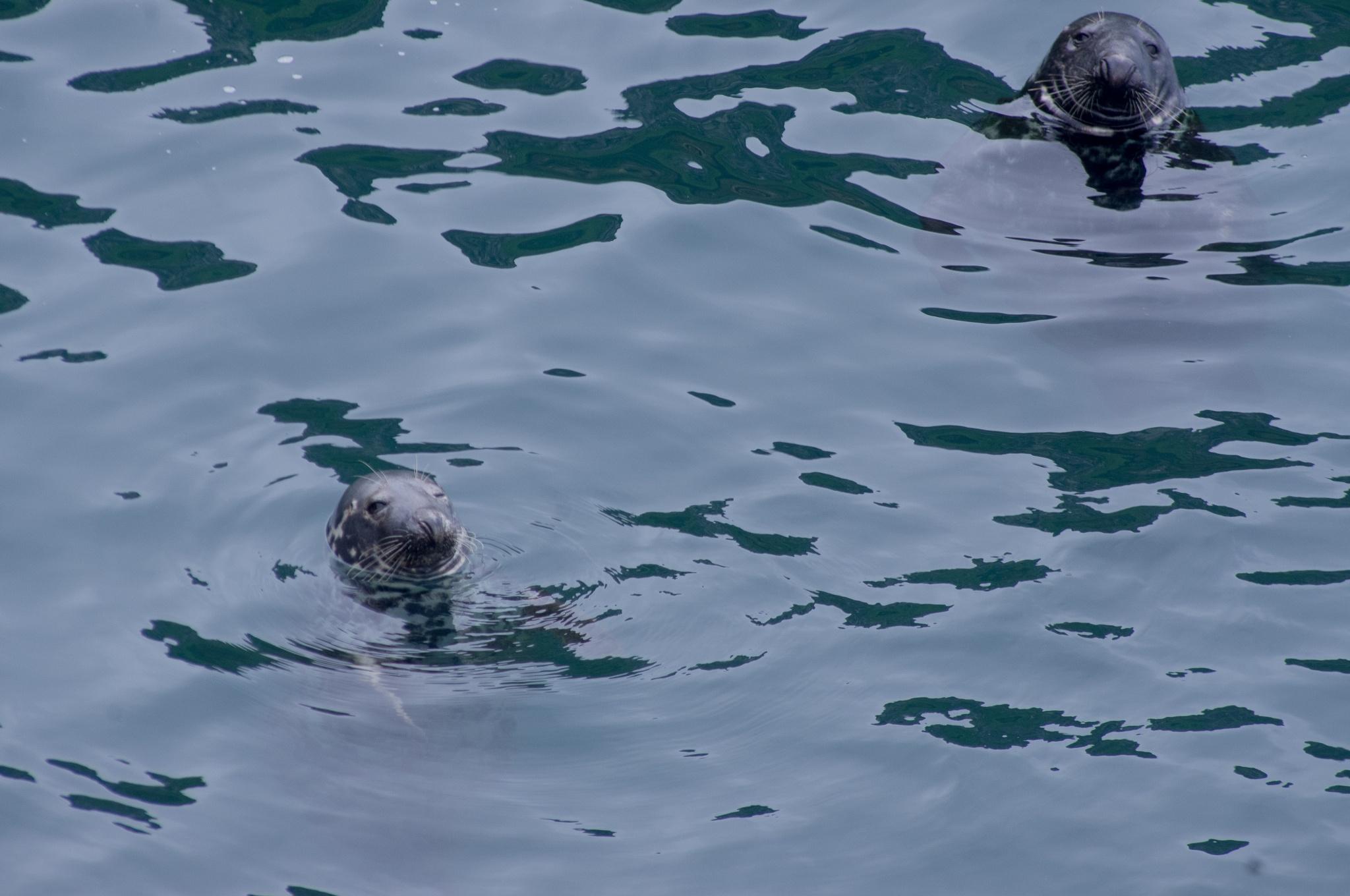 seals  by tom salt
