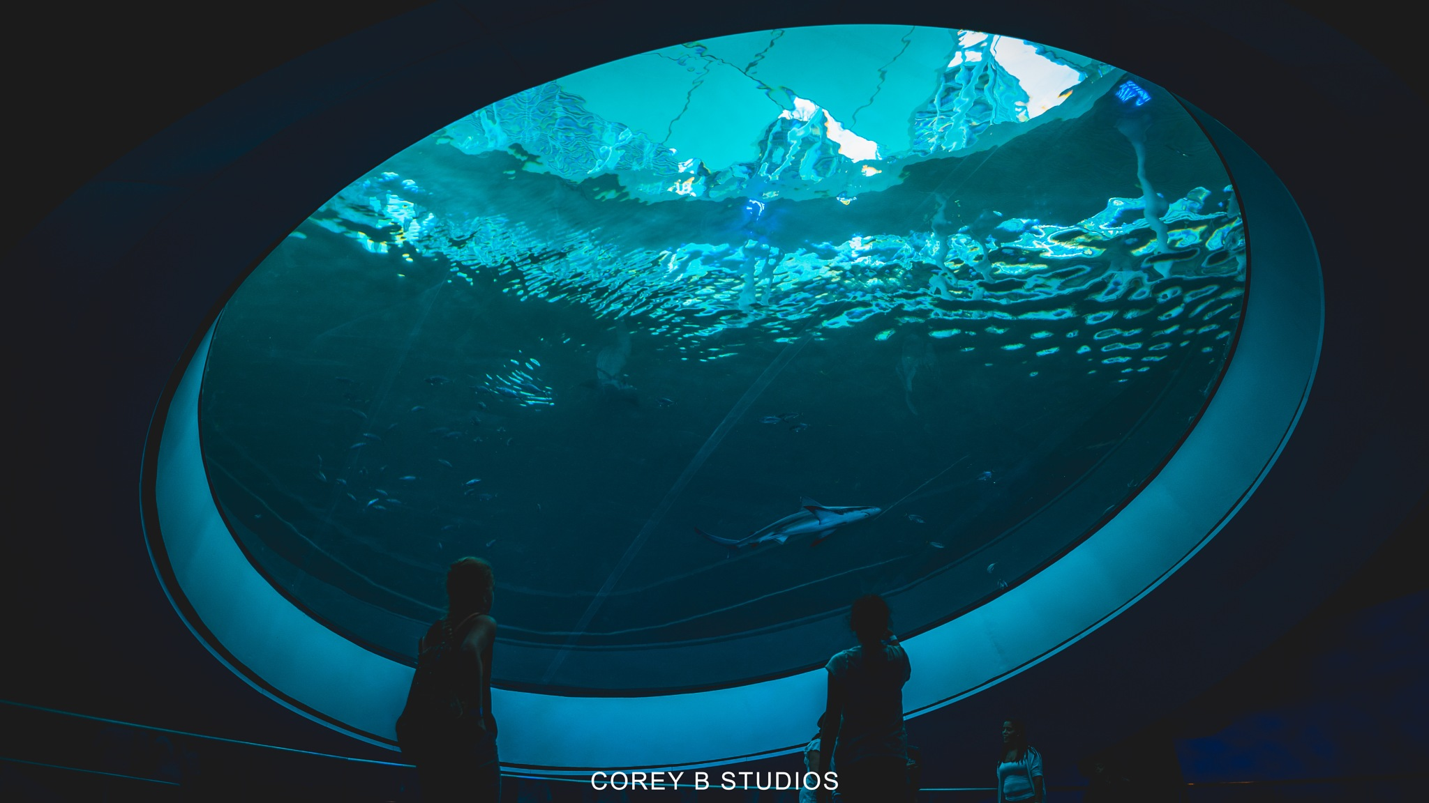 Under the Sea by Corey B Studios
