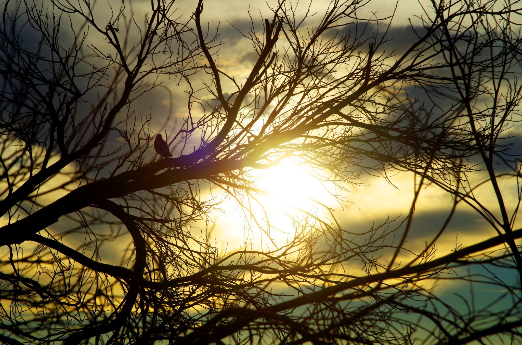sunset glow by cinzia.sawatzky