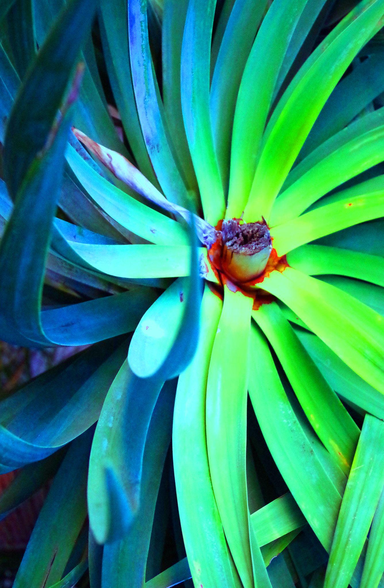 plant under street lamp by cinzia.sawatzky