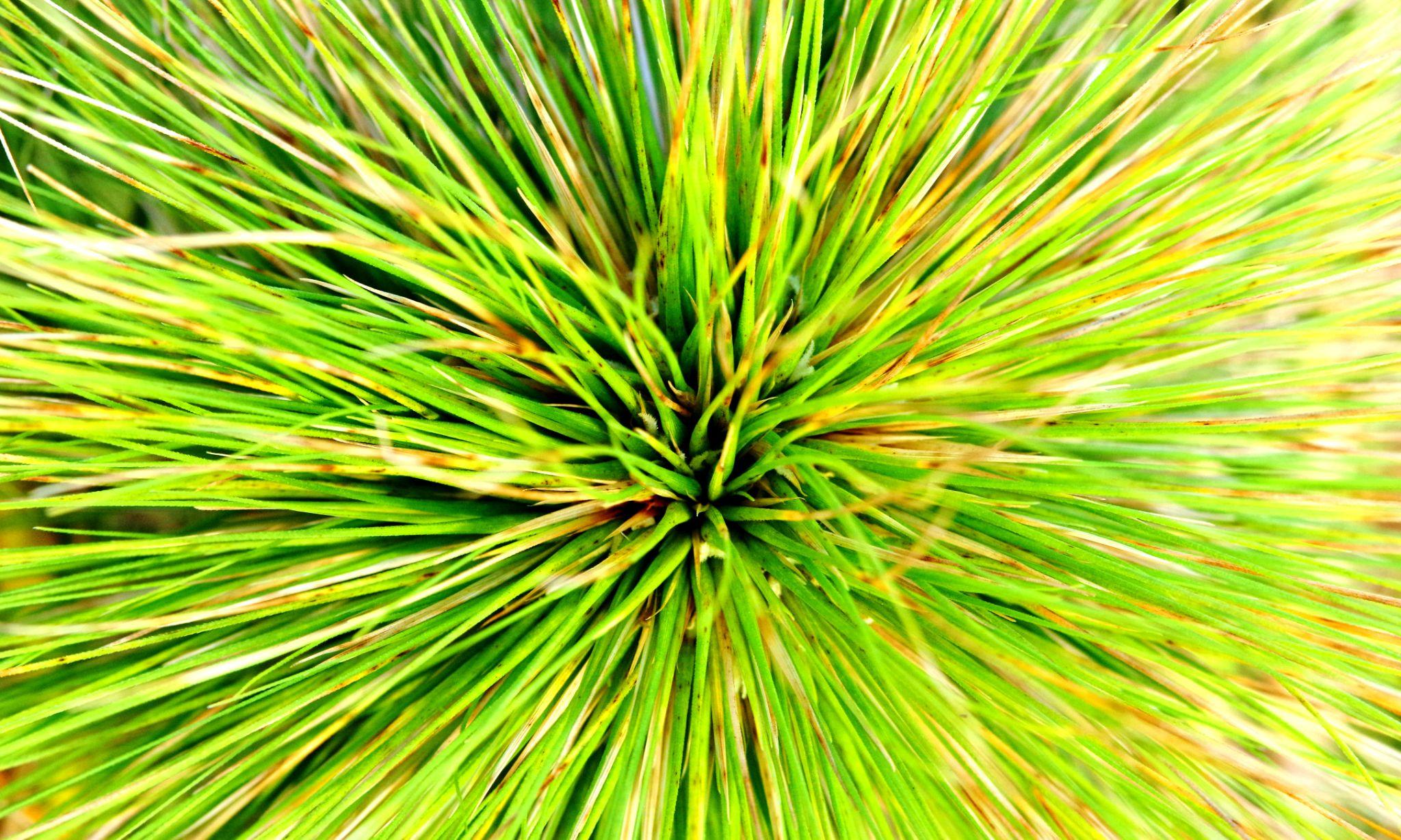 vibrant spikey green by cinzia.sawatzky