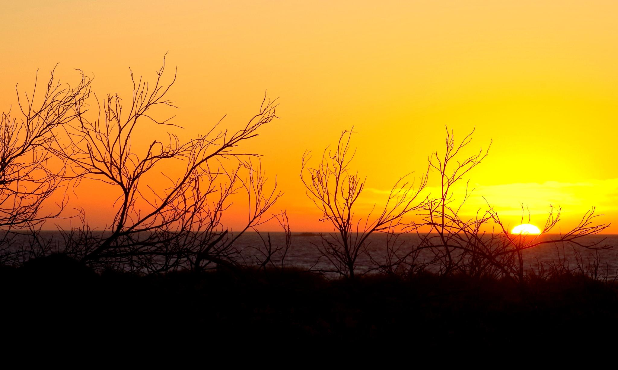 Twig Sunset D by cinzia.sawatzky