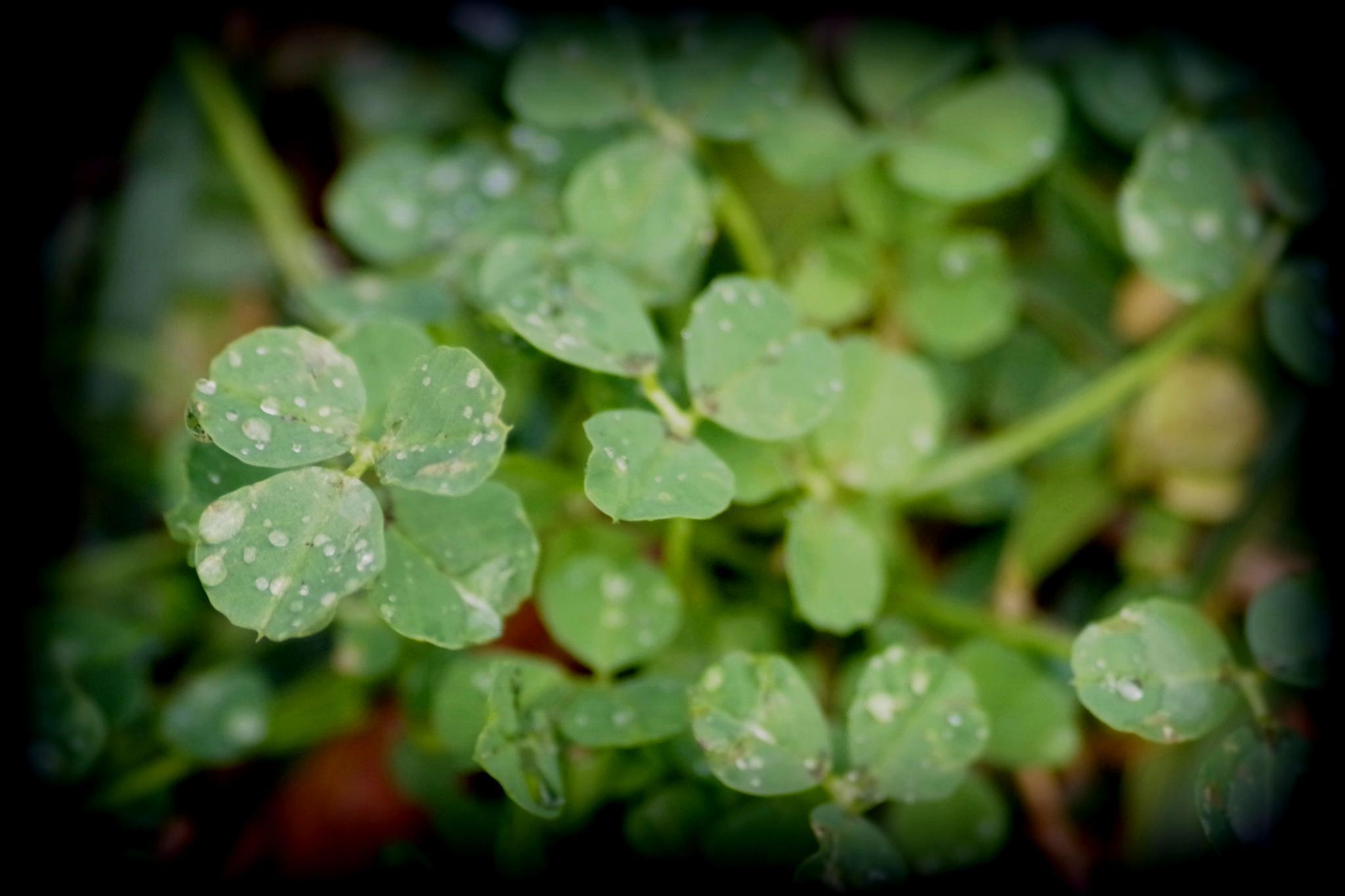 Drops of rain by cinzia.sawatzky