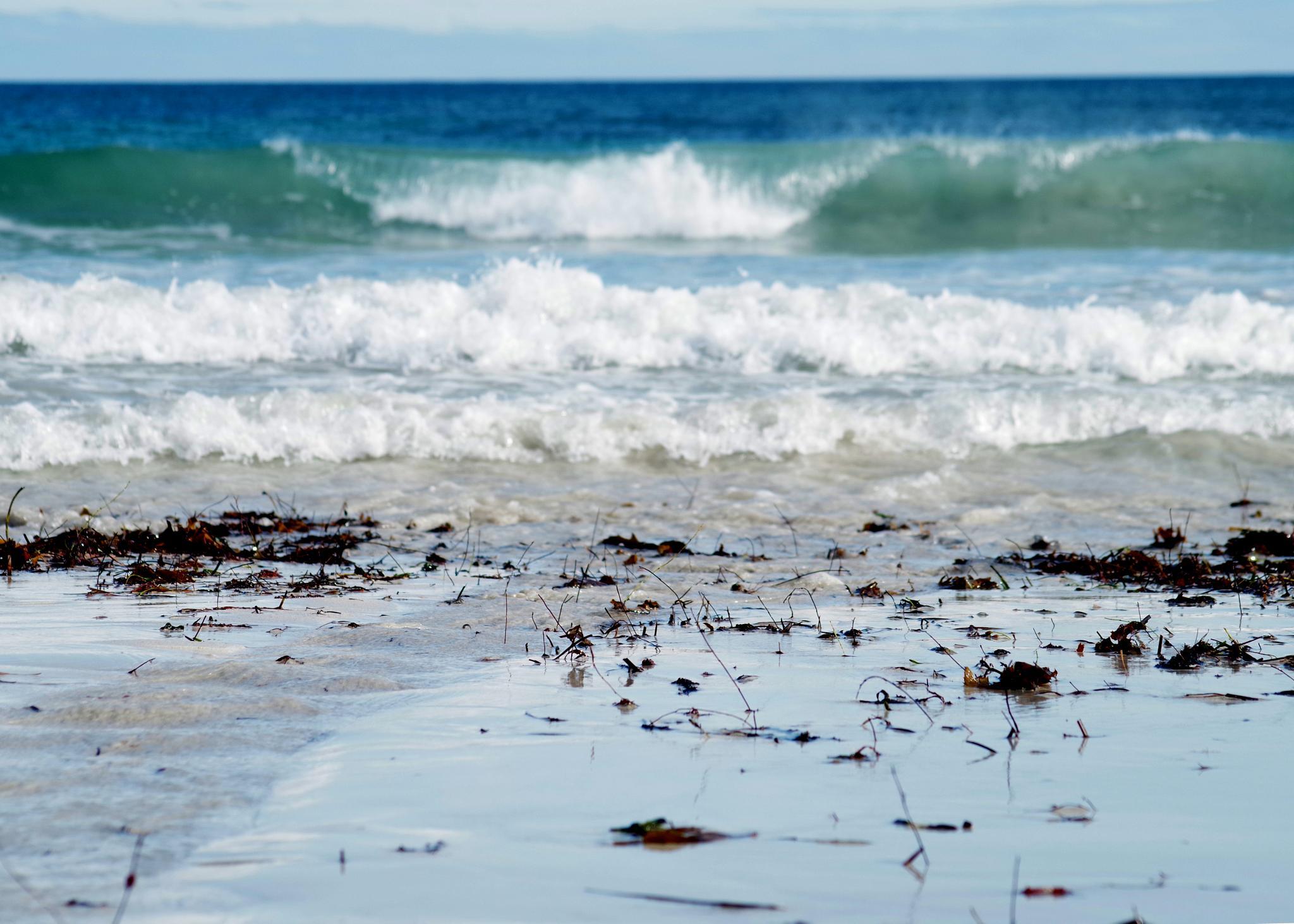 Beach reeds on a winter's day... by cinzia.sawatzky