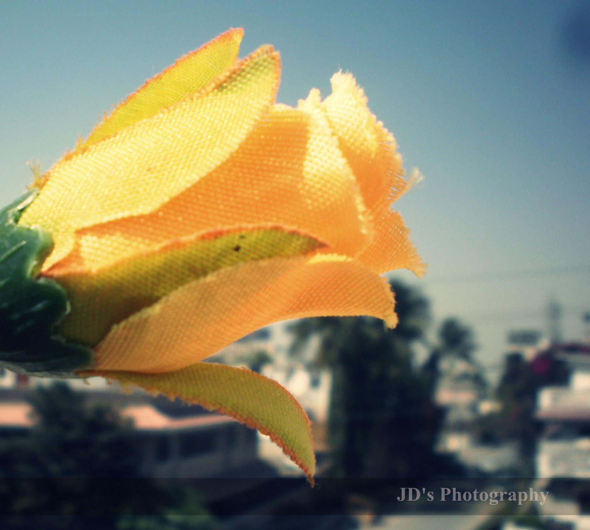Yellow (JD's Photography) by jawwad.khalil.16