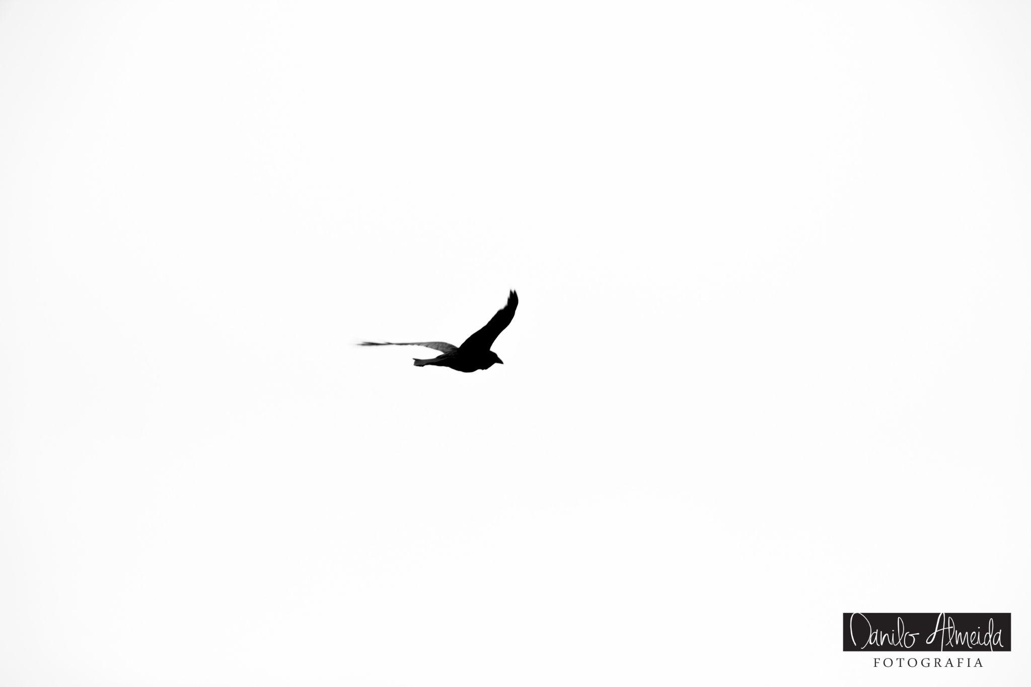 The Bird by Danilo Almeida