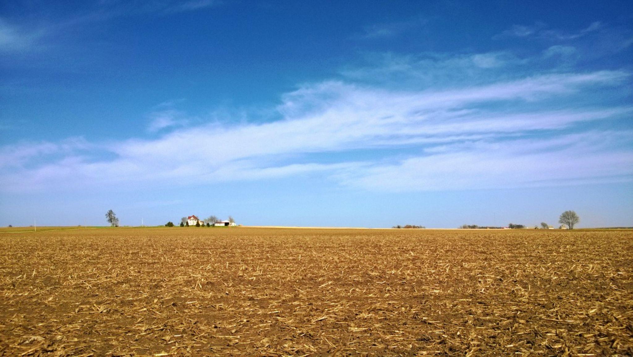 Soybean Fields by Danilo Almeida