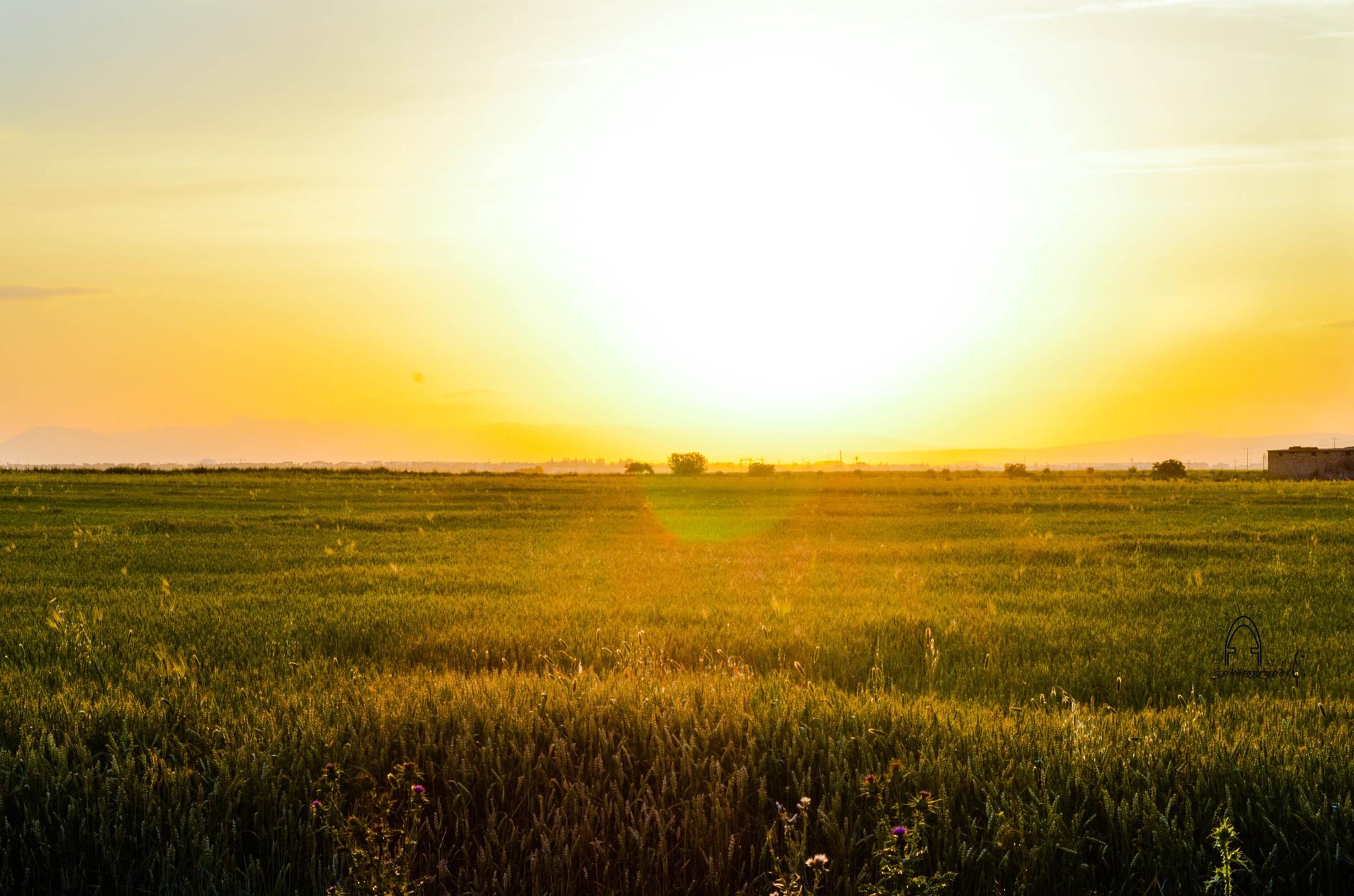 Farm sunset by Amine.O
