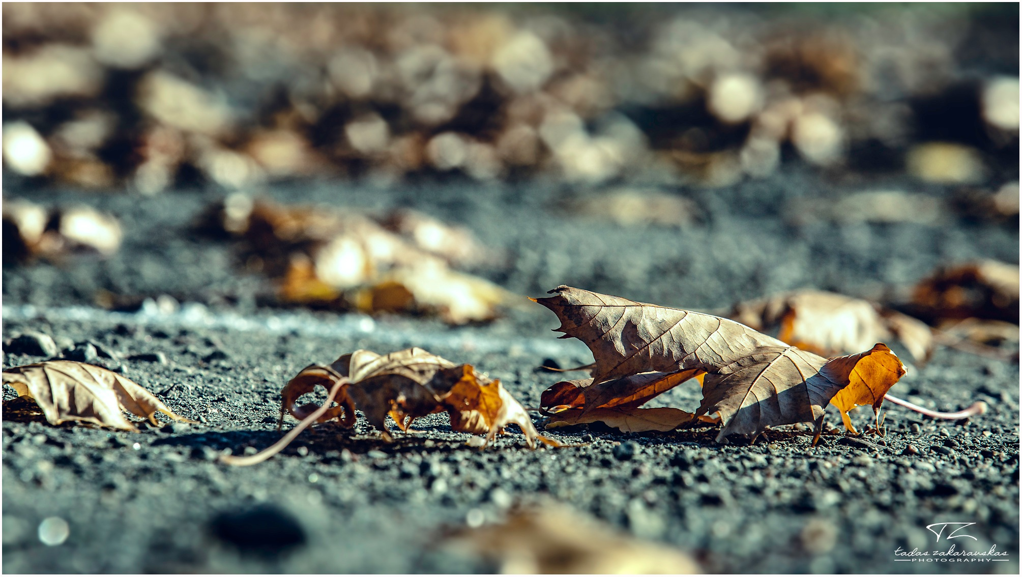 Untitled by TZ photography