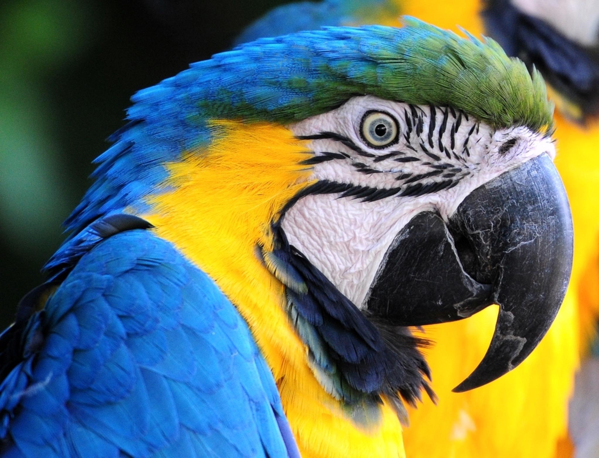 Parrot by henkschneider