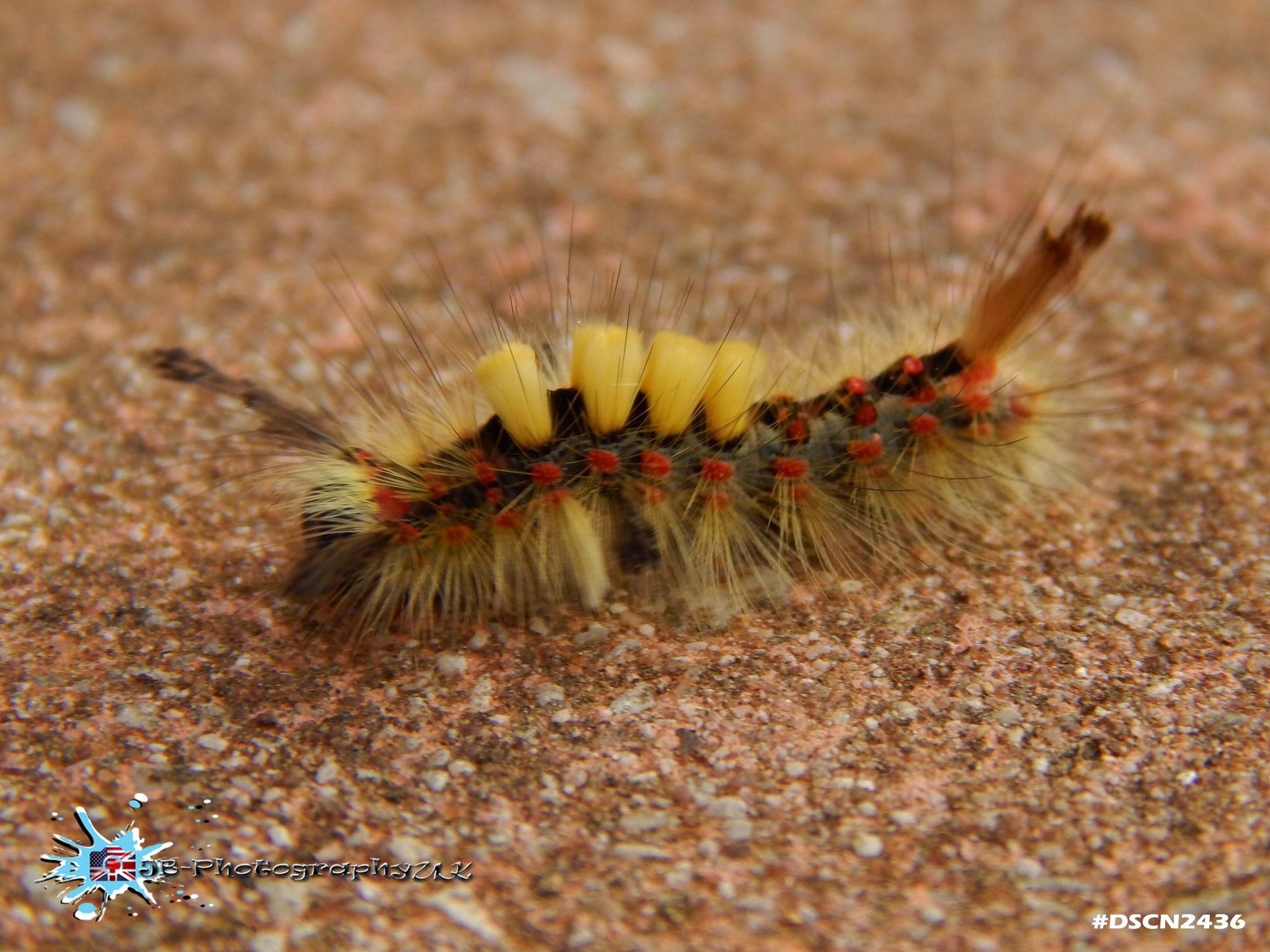 Caterpillar - JB-PhotographyUK  by Jordan Brasted