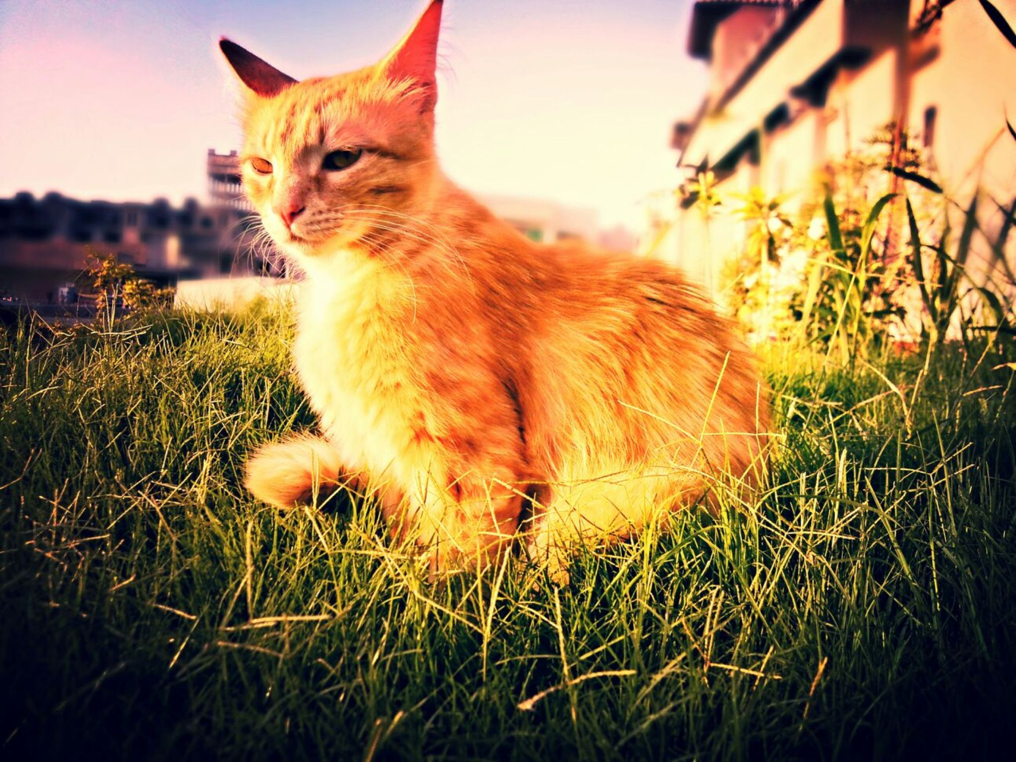 There are two means of refuge from the miseries of life: music and cats. by junaid.akram.395