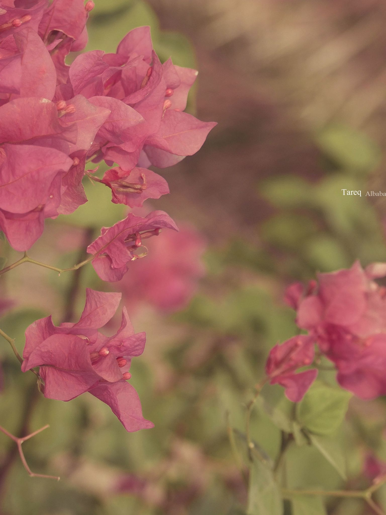 pink your life <3 by Tareq Albaba
